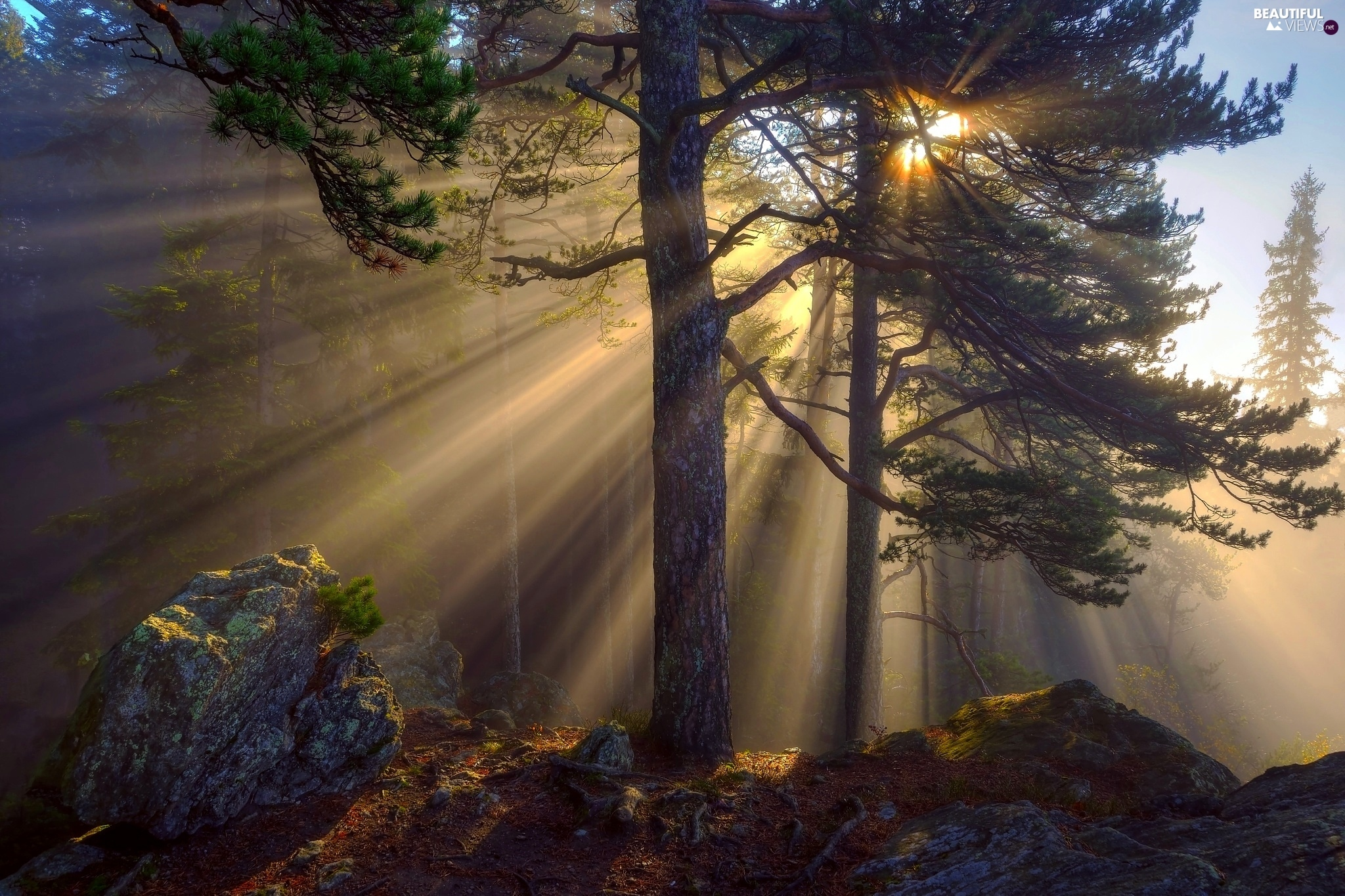 Sunrise, trees, Fog, viewes, forest, morning, Stone ...