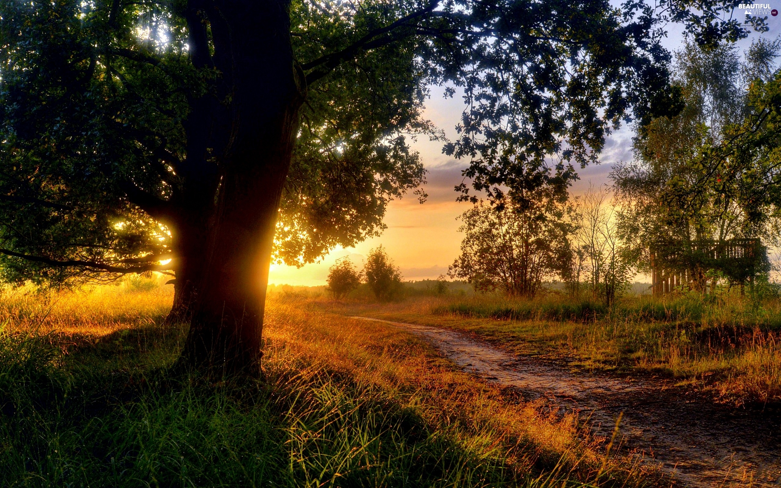 morning, Sunrise, Way, trees, Field