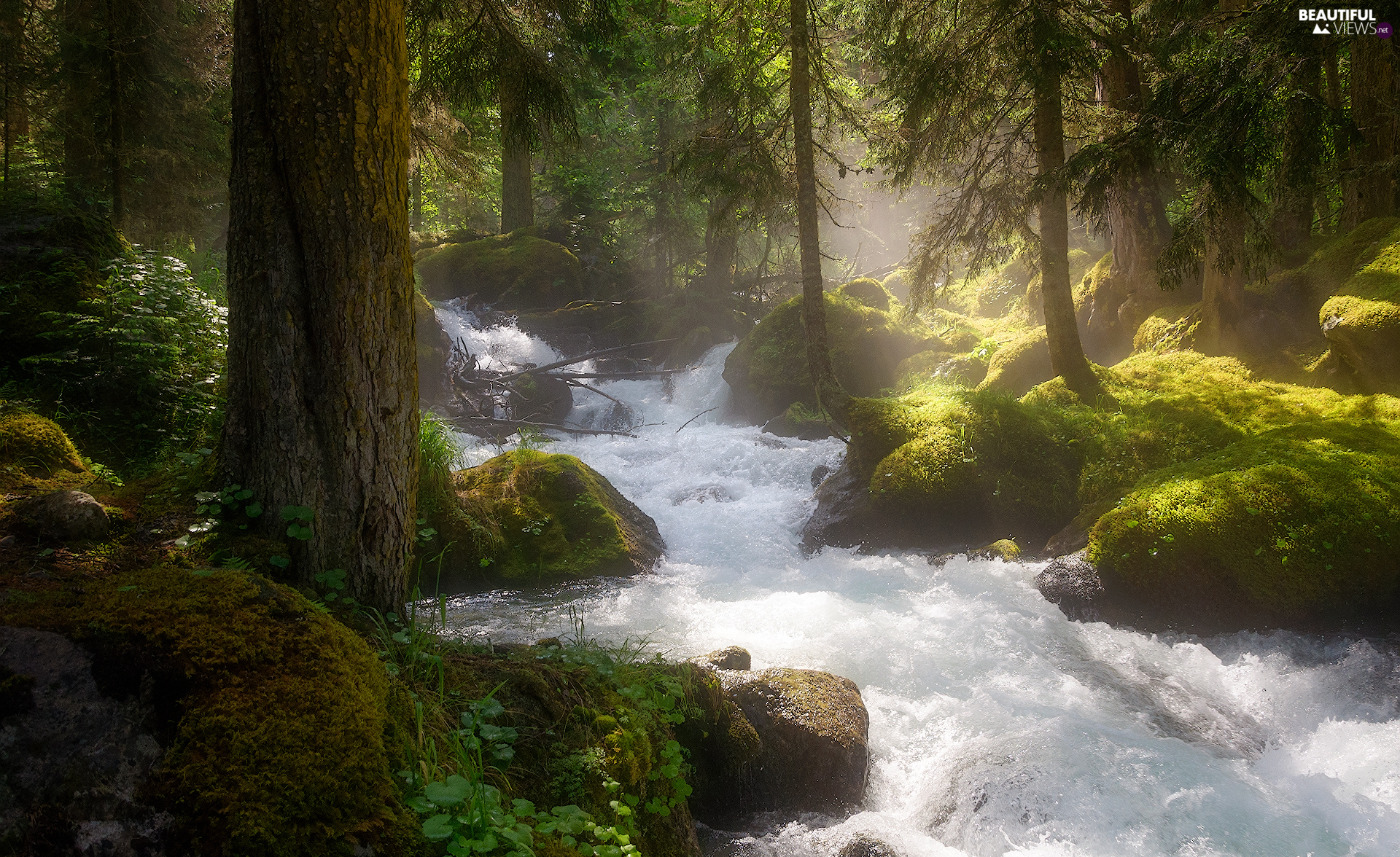 mossy, forest, Plants, light breaking through sky, Stones, River