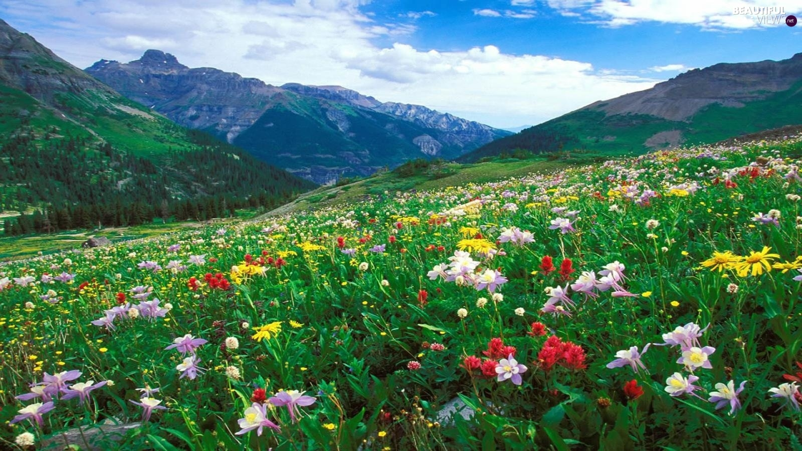 Mountains, Meadow, Flowers
