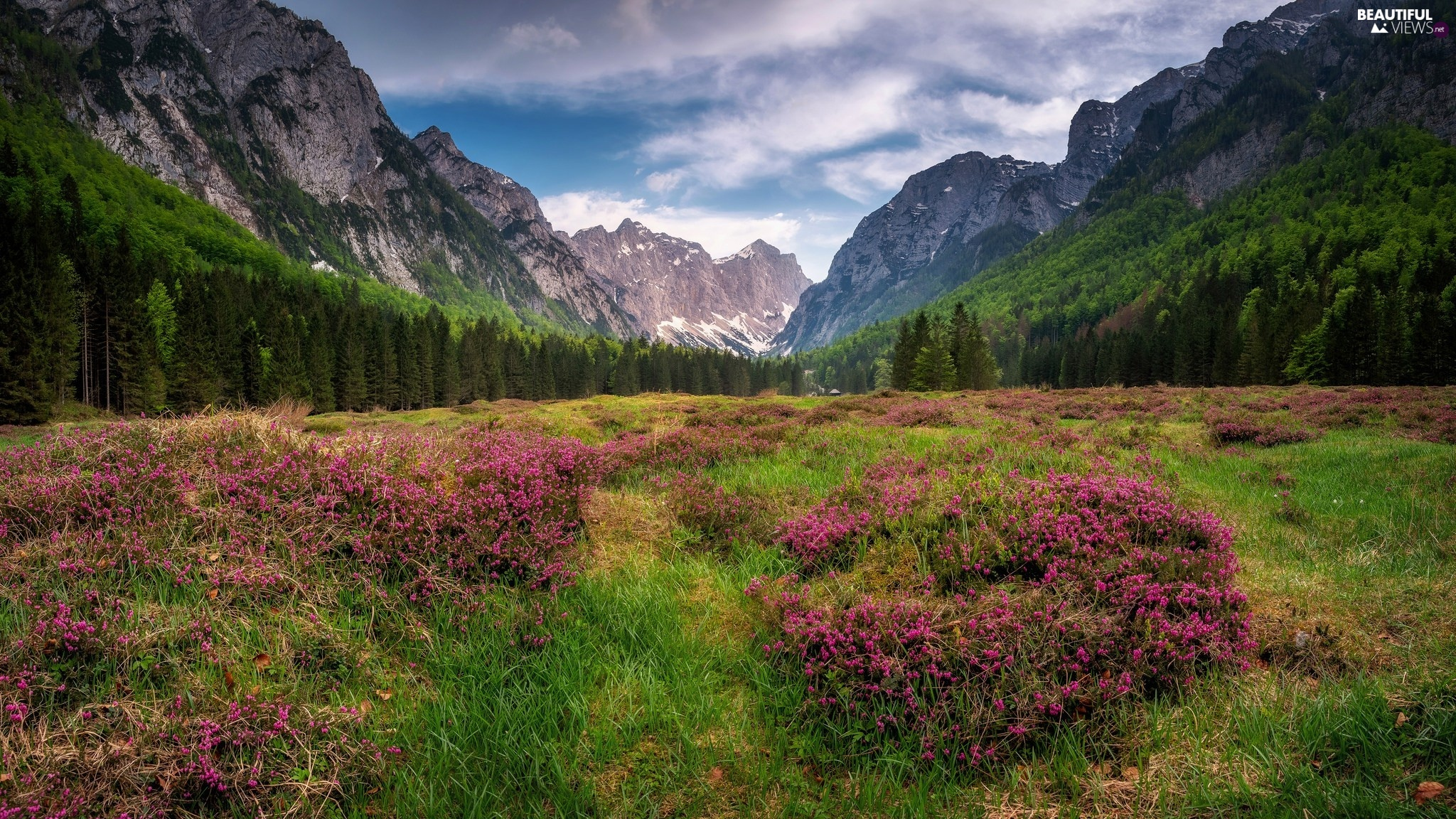Slovenia, Julian Alps Mountains, Meadow, trees, Flowers, Triglav National Park, Krma Valley, viewes
