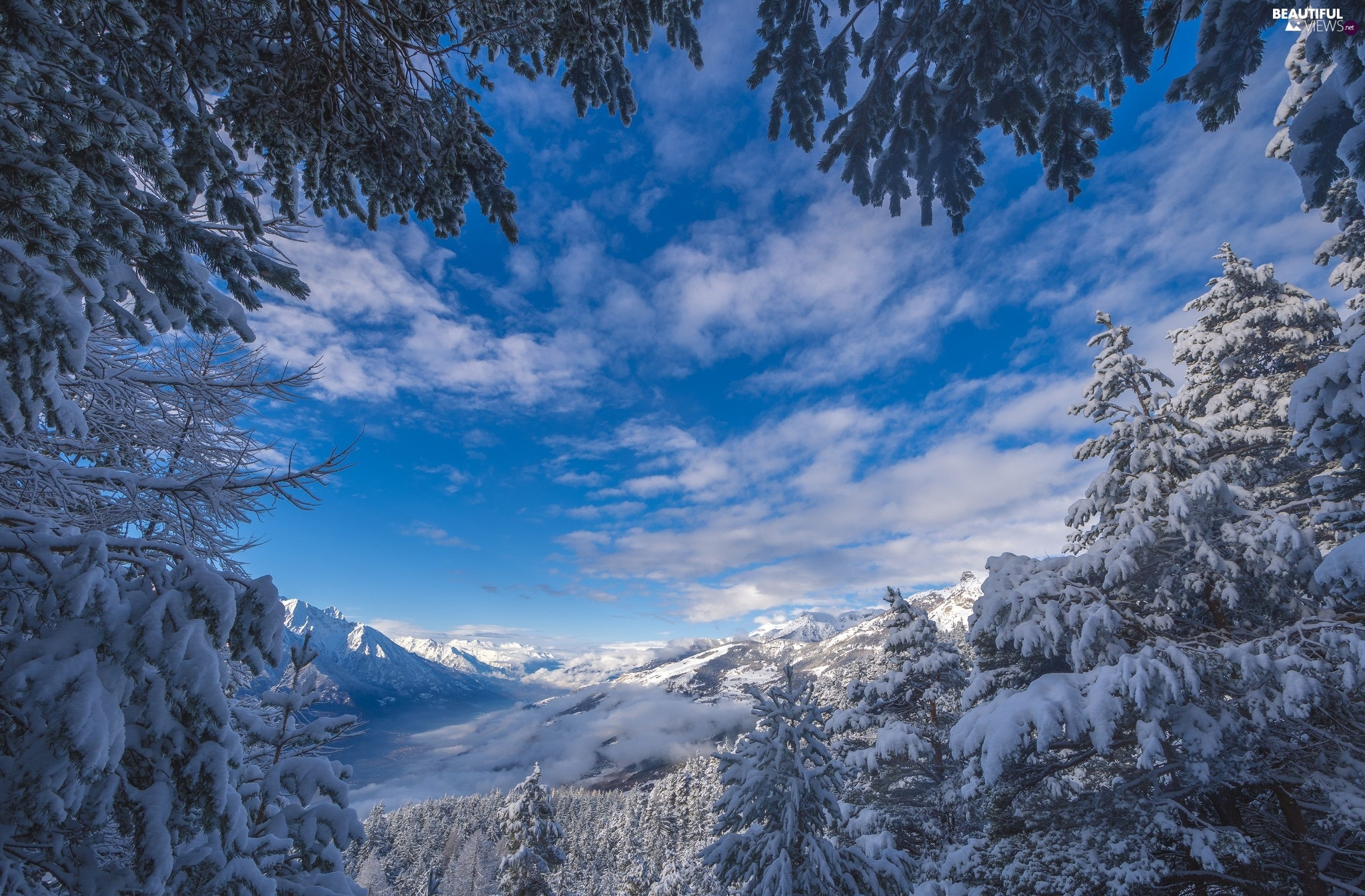 Snowy, Spruces, winter, Mountains