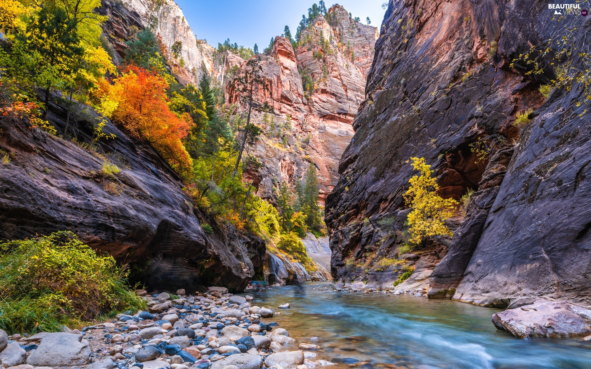 Zion Narrows Canyon, Utah State, VEGETATION, Zion National Park, The United States, rocks, Virgin River