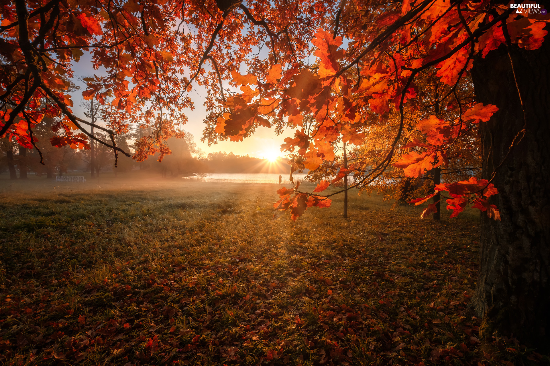 trees, autumn, viewes, oak, rays of the Sun, lake, Leaf, Fog, branch pics