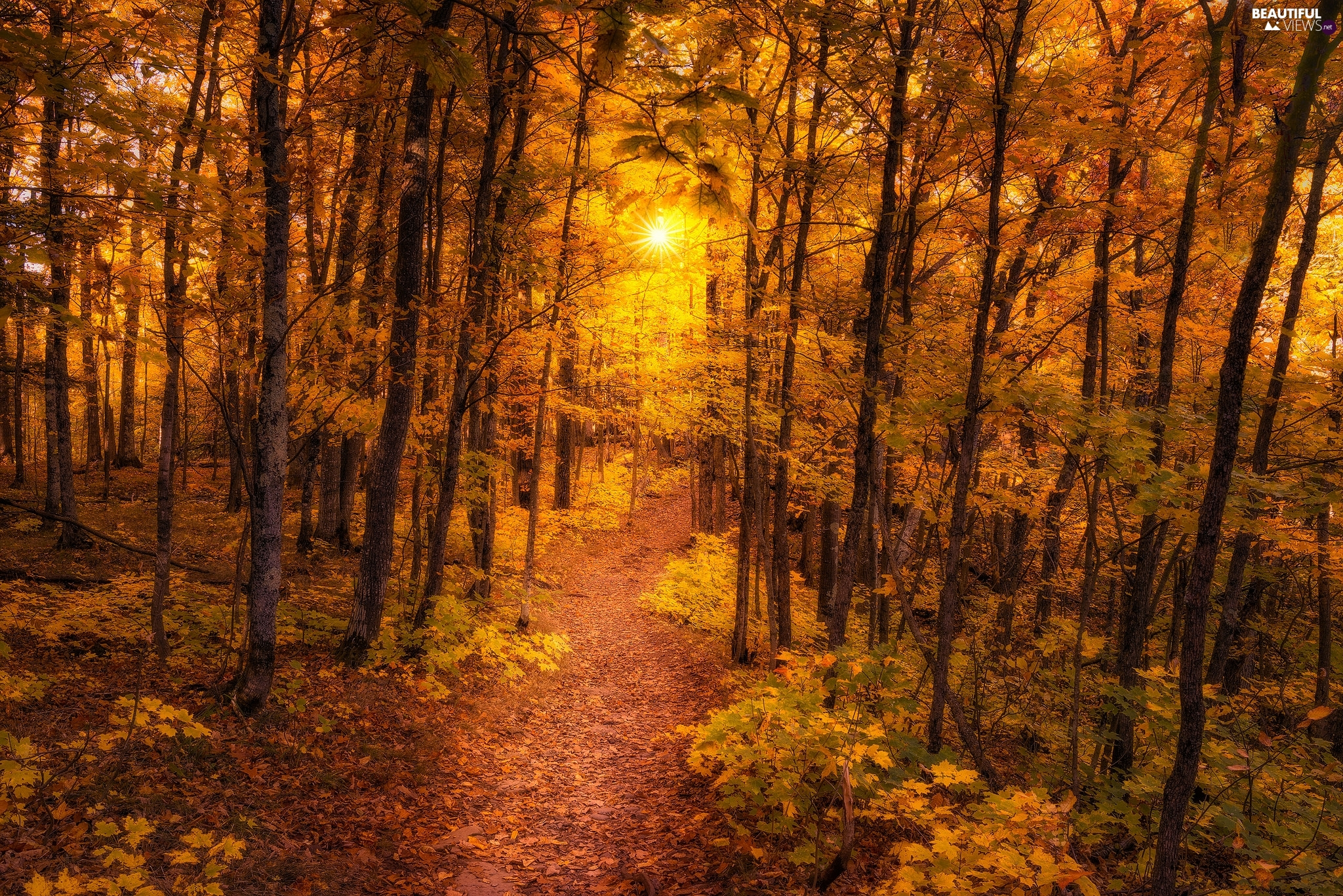 forest, Path, rays of the Sun, autumn