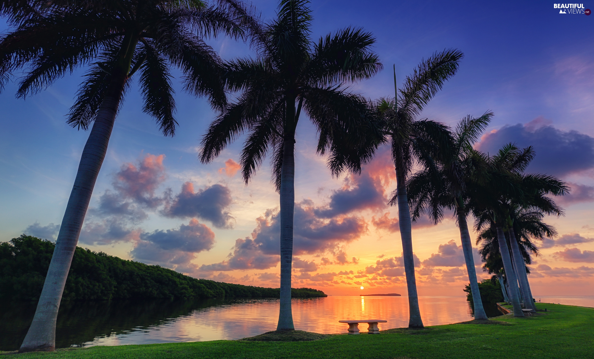 Great Sunsets, clouds, Palms, bench, sea