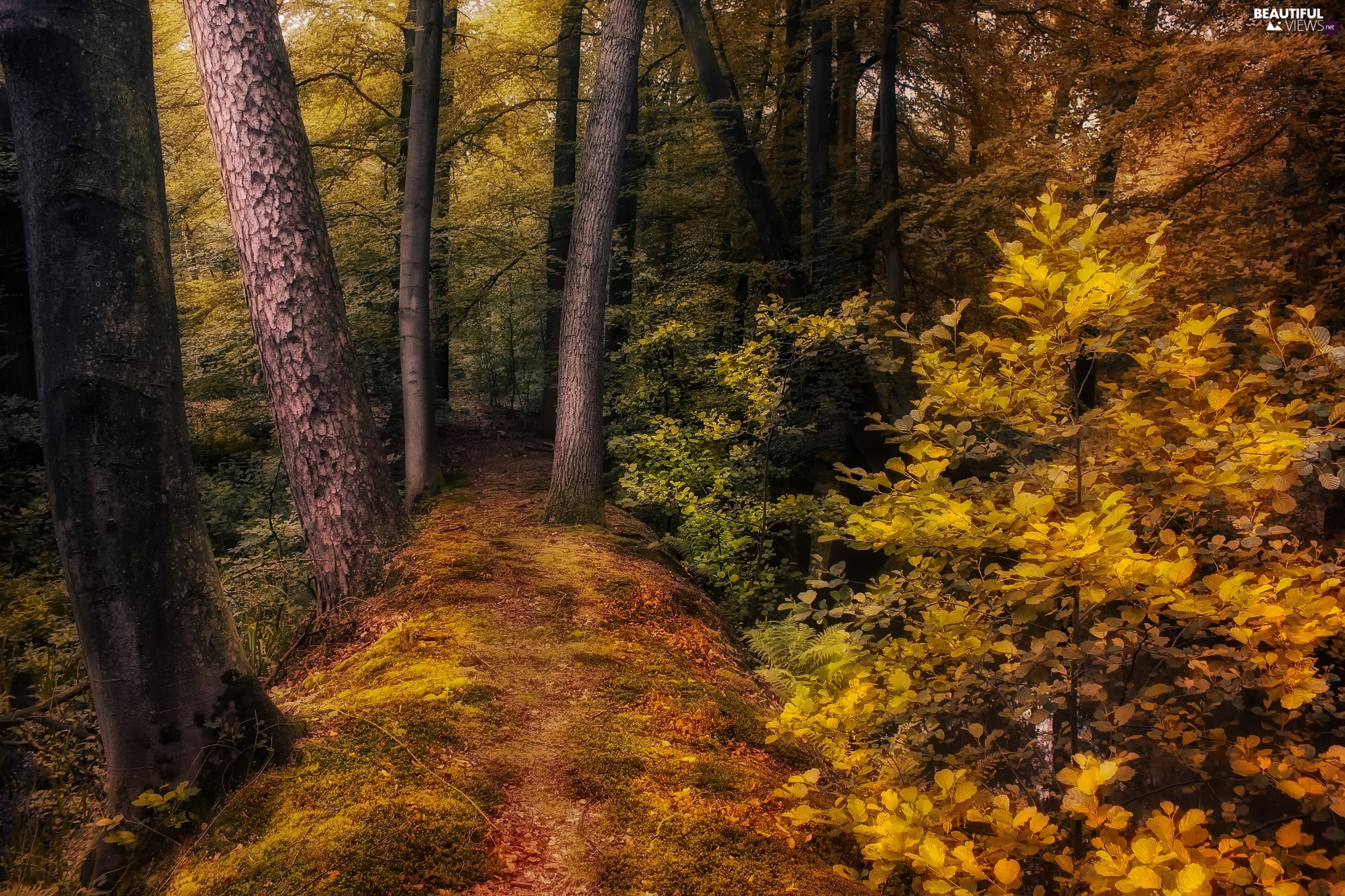 forest, Bush, autumn, Path