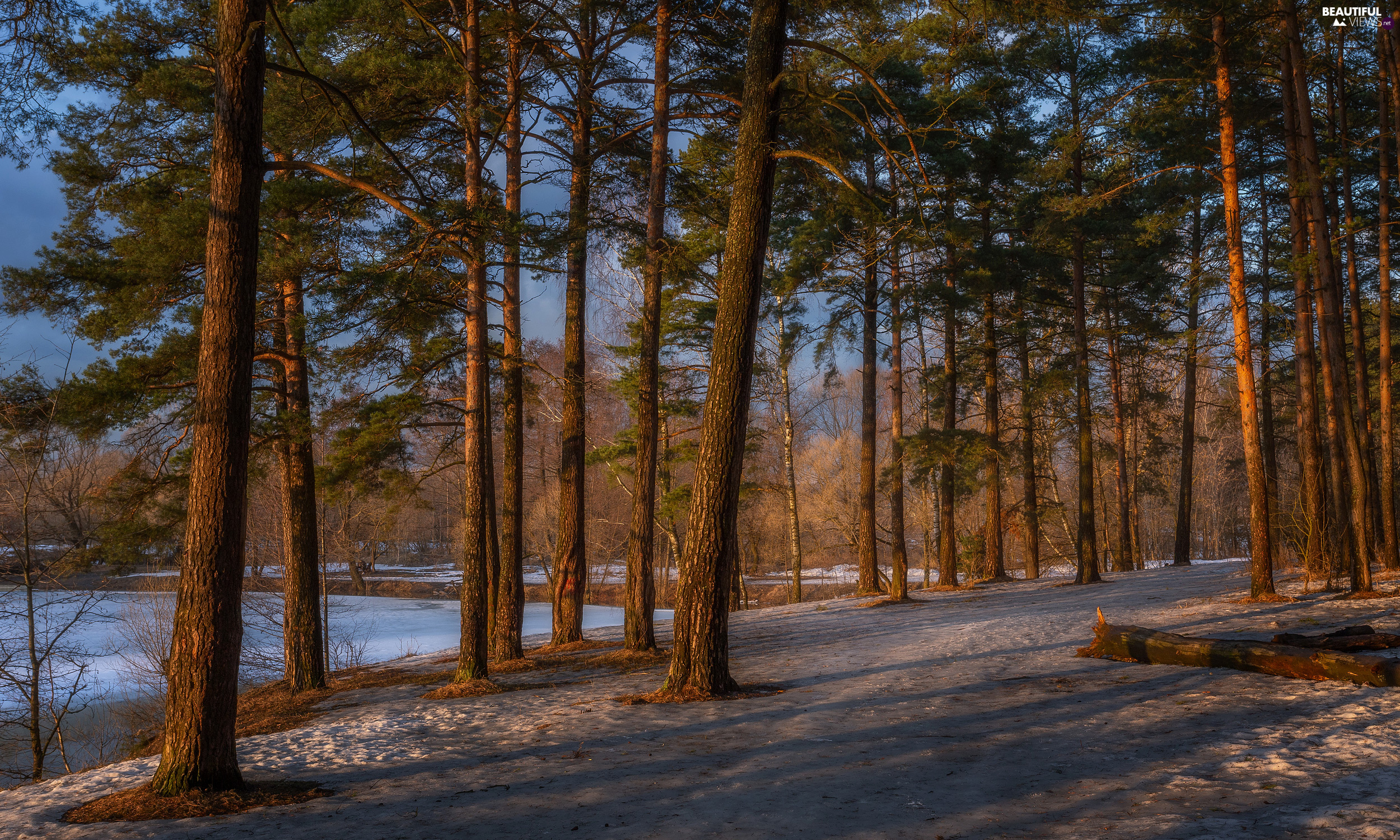 high, winter, viewes, Path, trees, forest