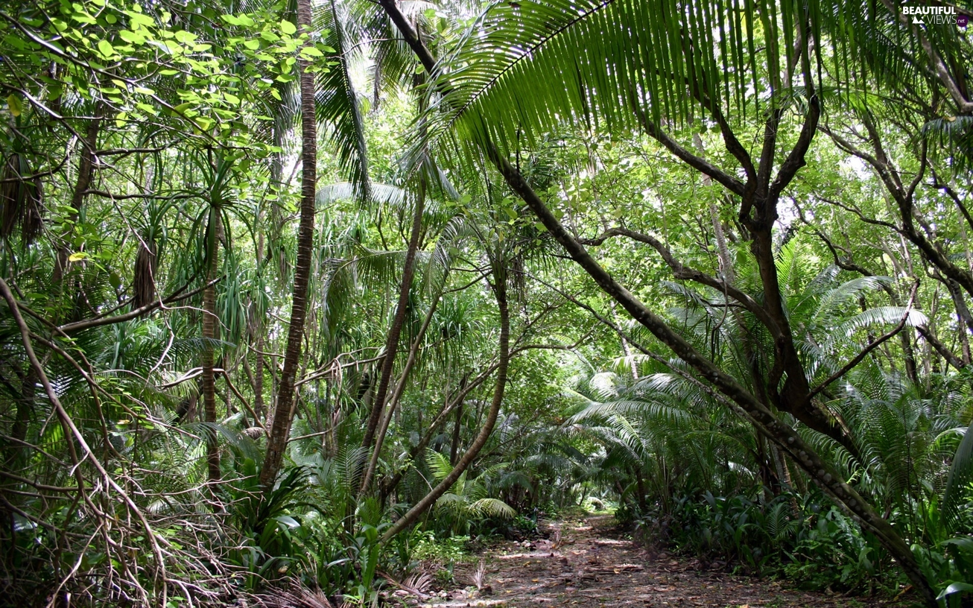 jungle, Path