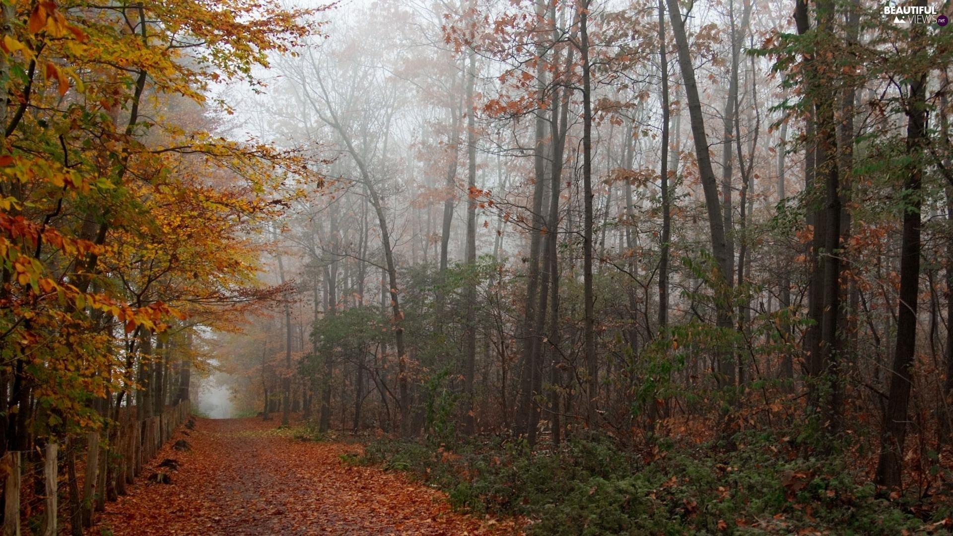 viewes, autumn, color, trees, landscape, Path, Leaf
