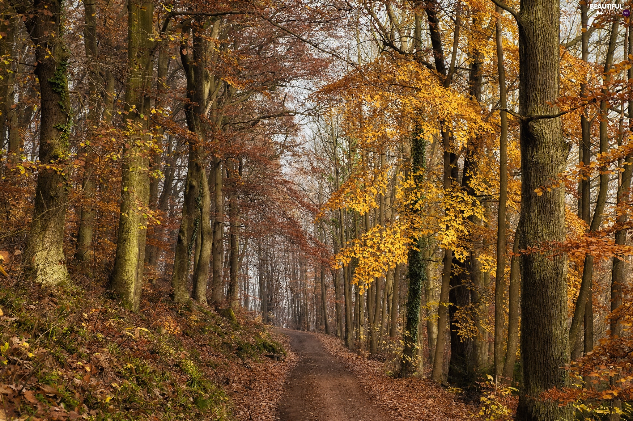 trees, Way, Leaf, Path, forest, viewes, autumn