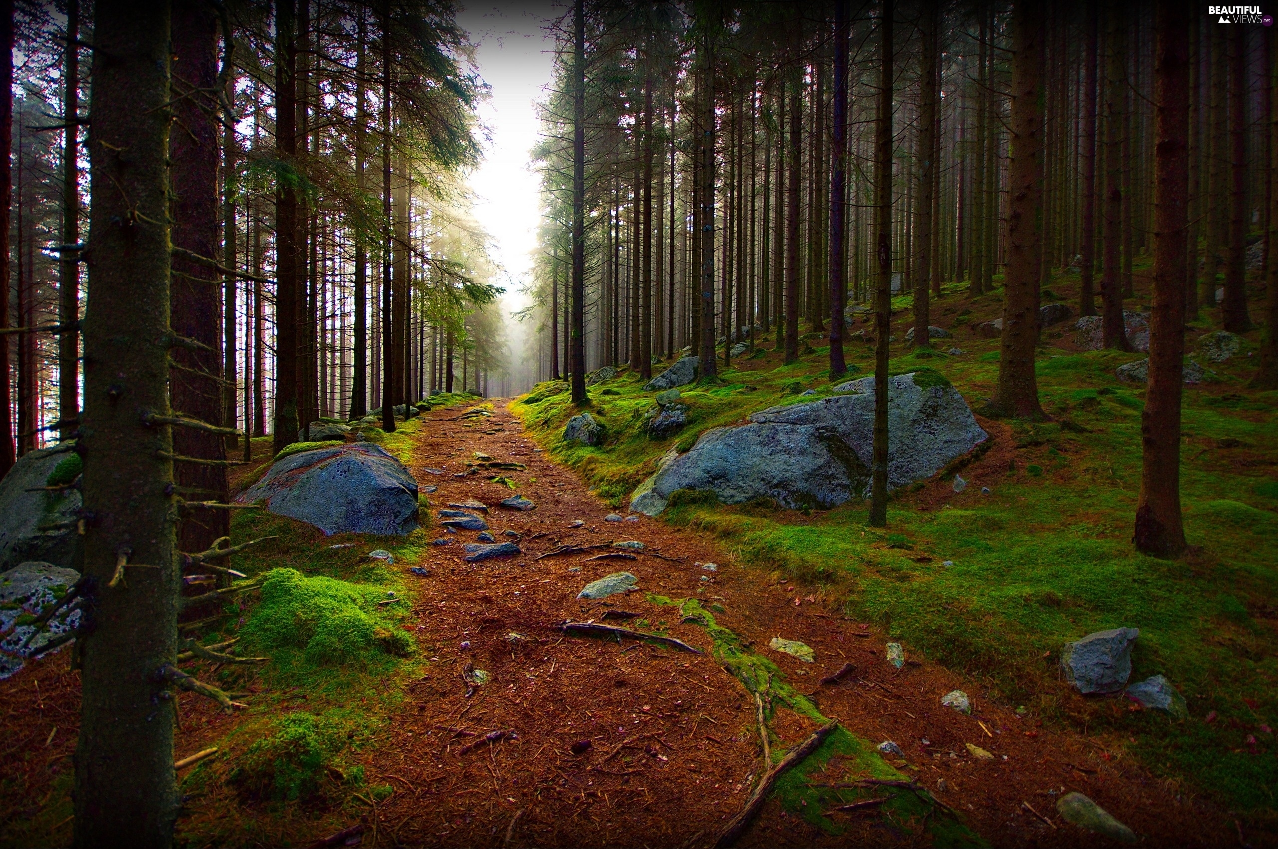 Path, Stones, trees, viewes, forest