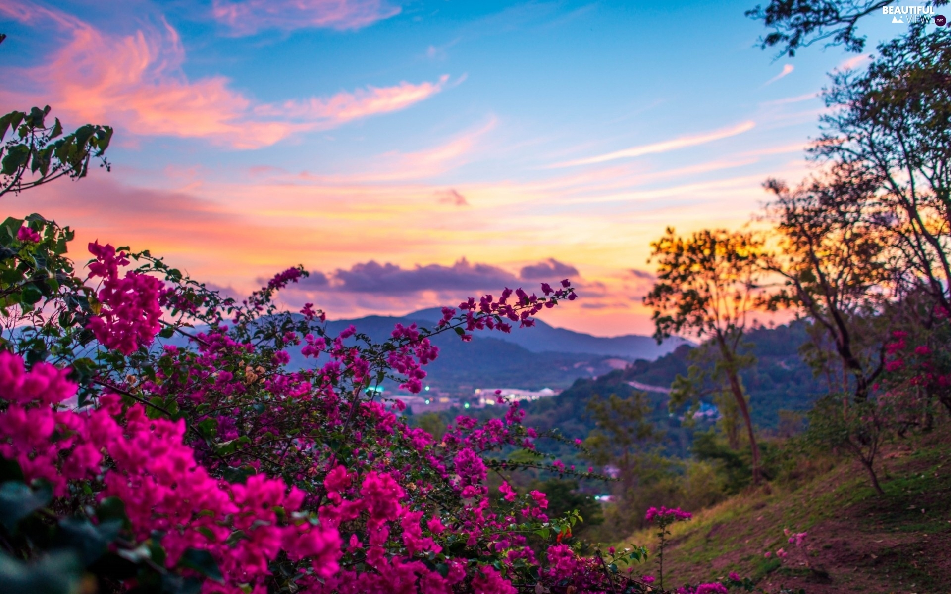 west, The Hills, pink Flowers, sun - Beautiful views wallpapers: 1920x1200