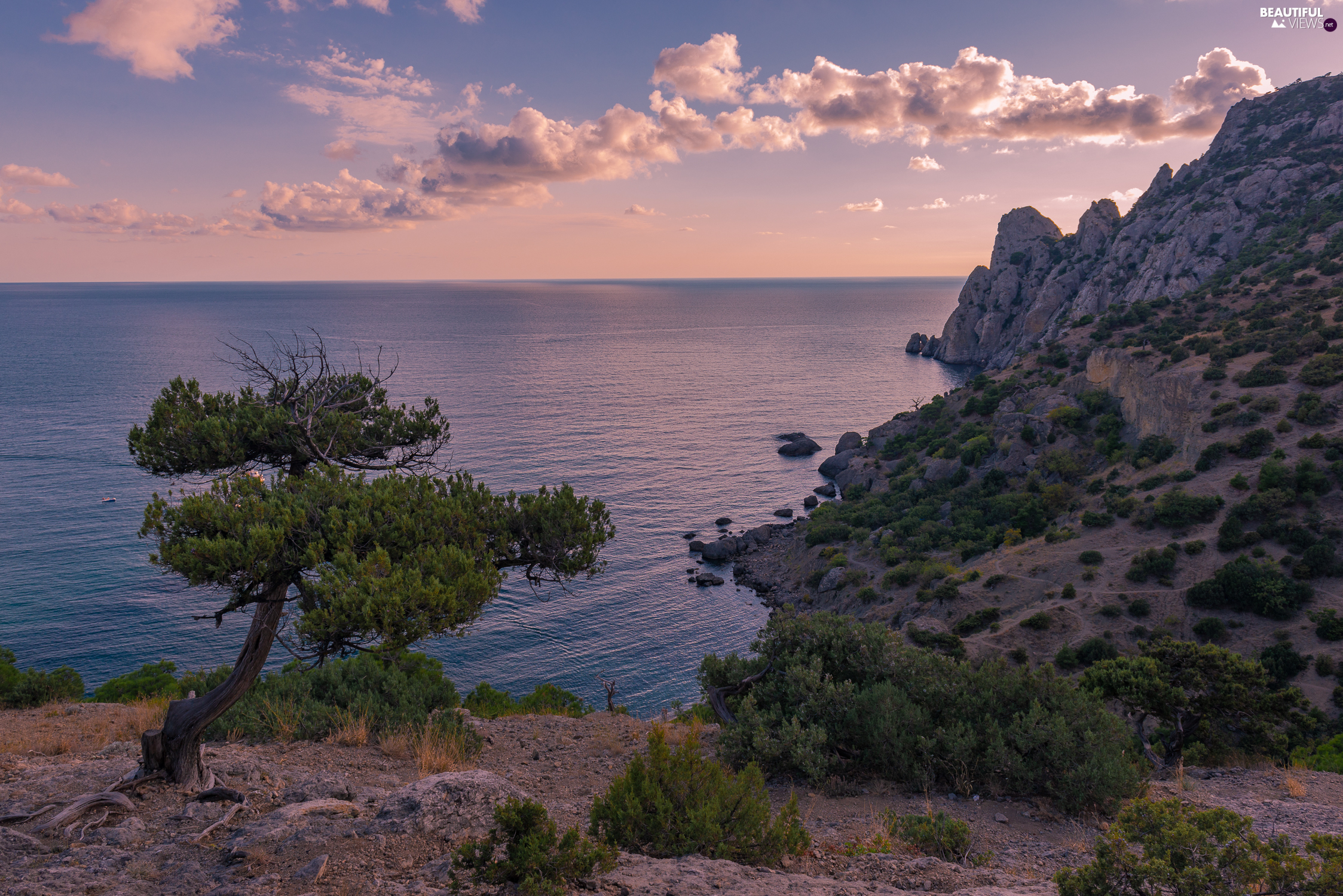 coast, Great Sunsets, trees, clouds, sea, rocks, Plants