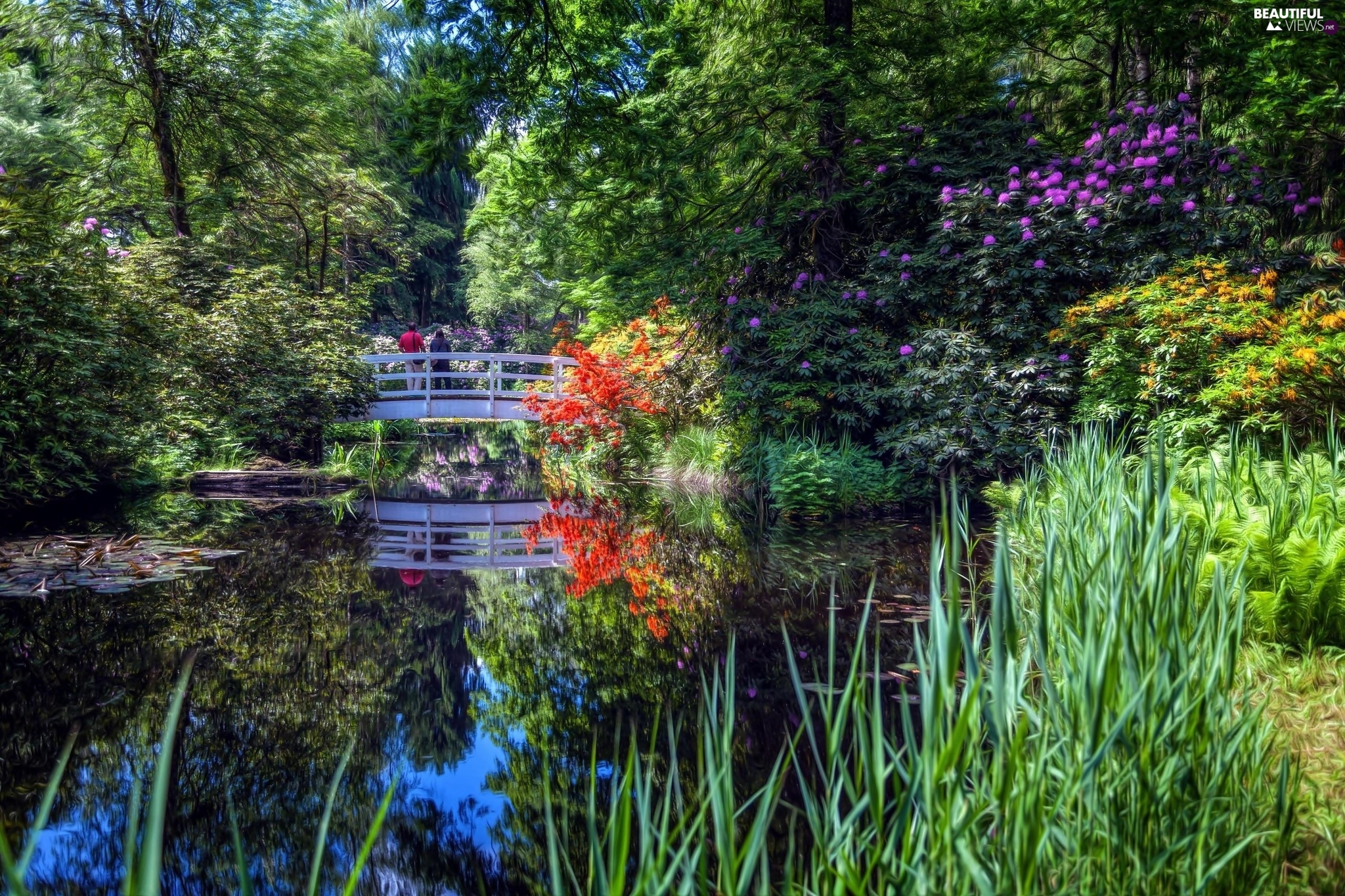 Pond - car, Park, bridge, trees, grass, Spring, Bush, Rhododendron, viewes