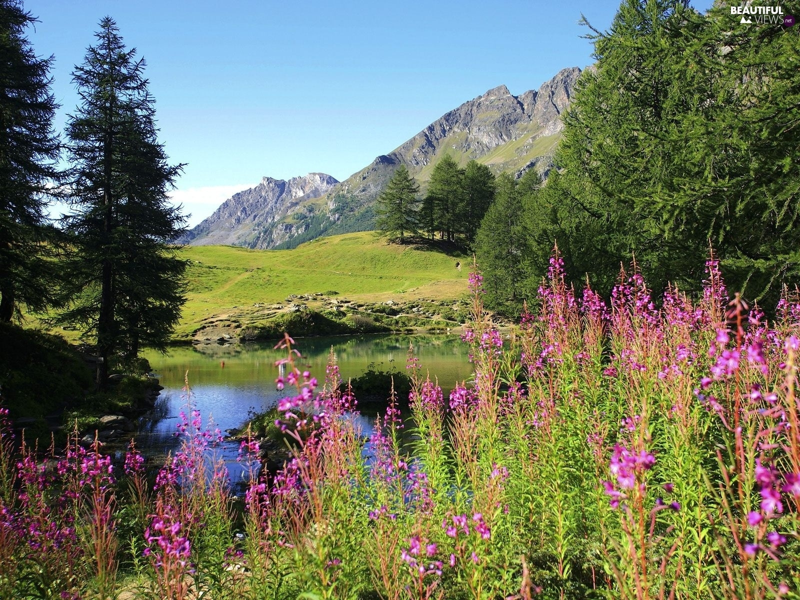 purple, Flowers, Mountains, River, Spring