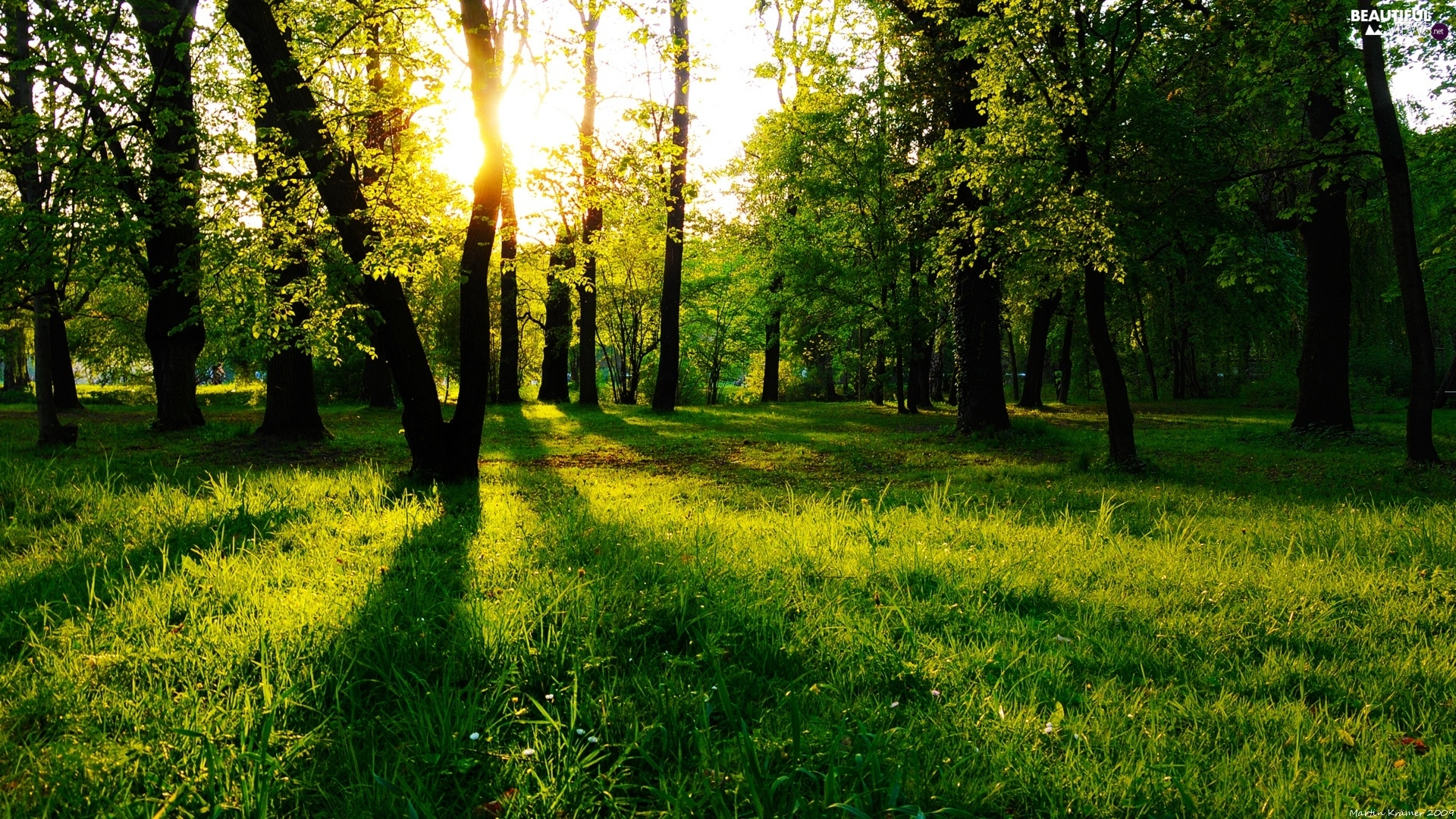 trees, nature, rays, sun, viewes, forest