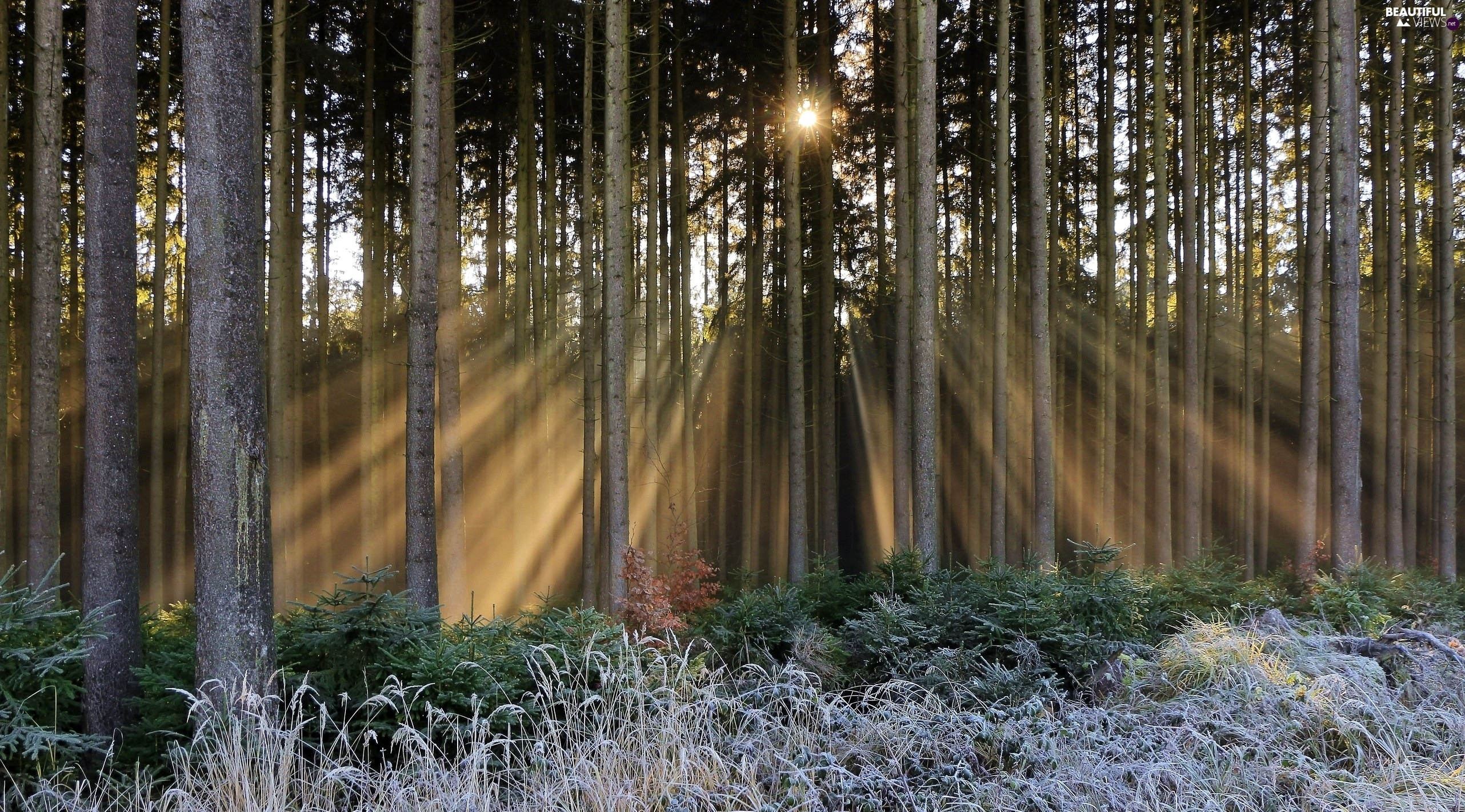 grass, forest, viewes, rays of the Sun, trees