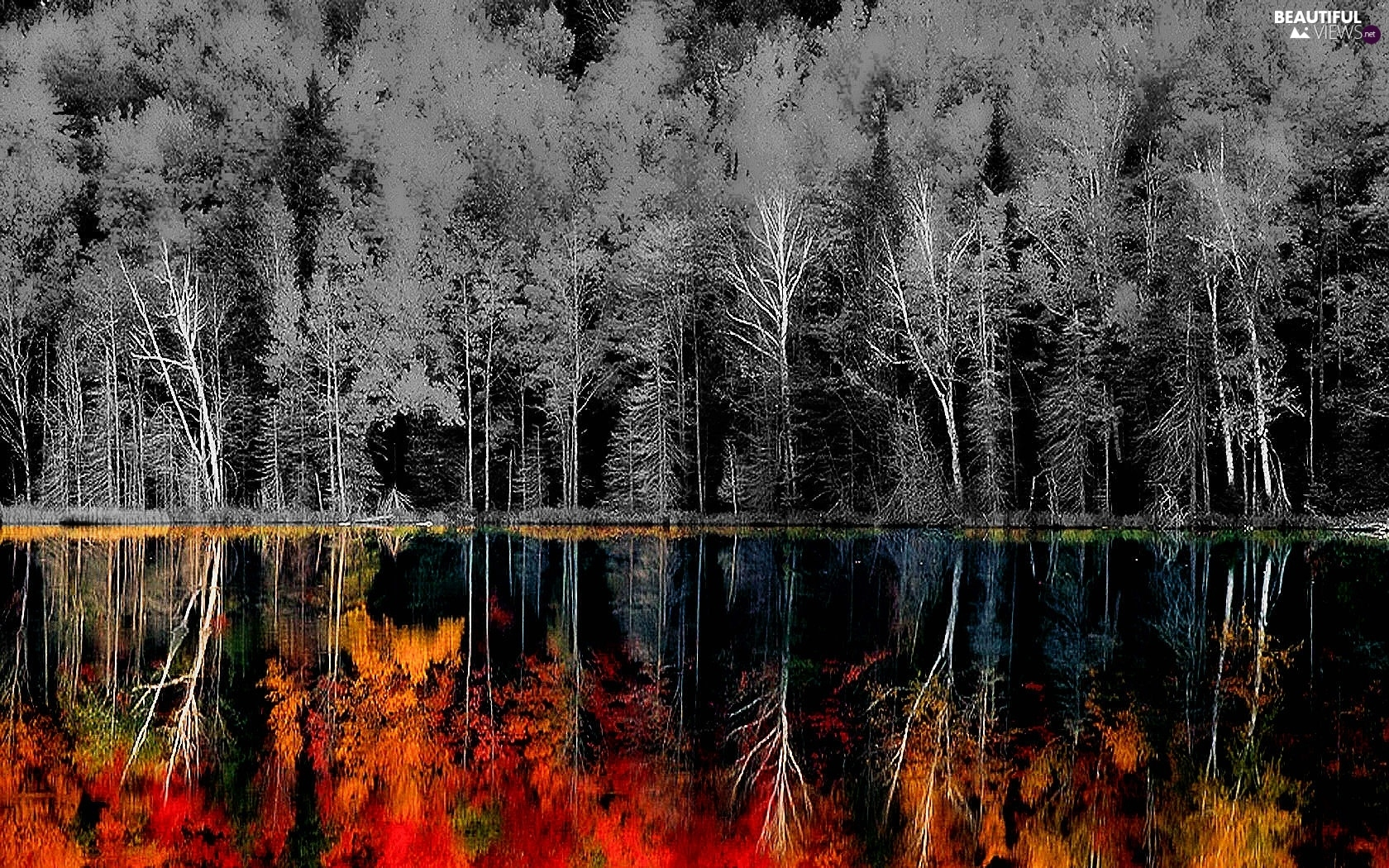 trees, color, reflection, viewes
