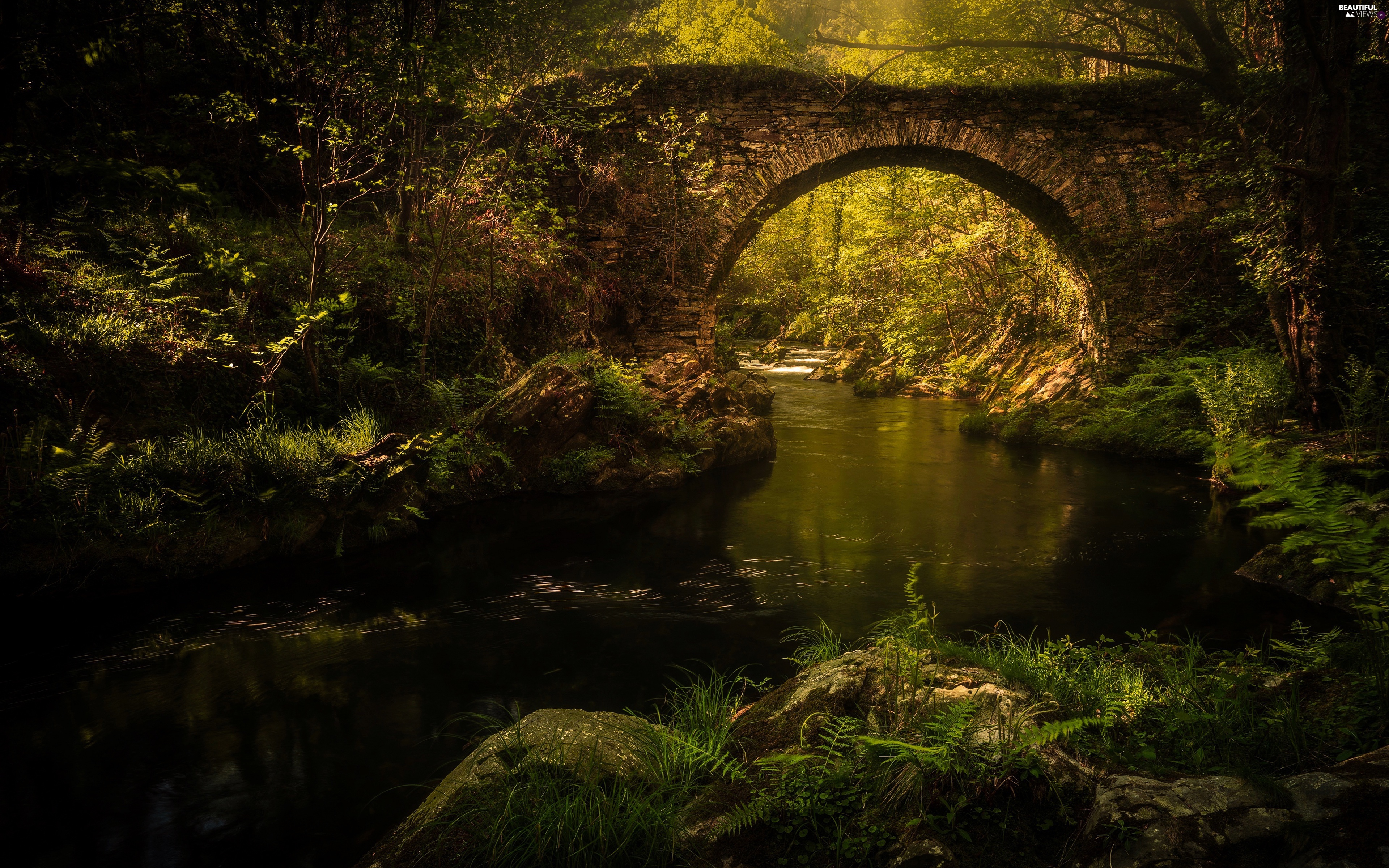 River, trees, Plants, viewes, fern, Arch Bridge, stone, Stones