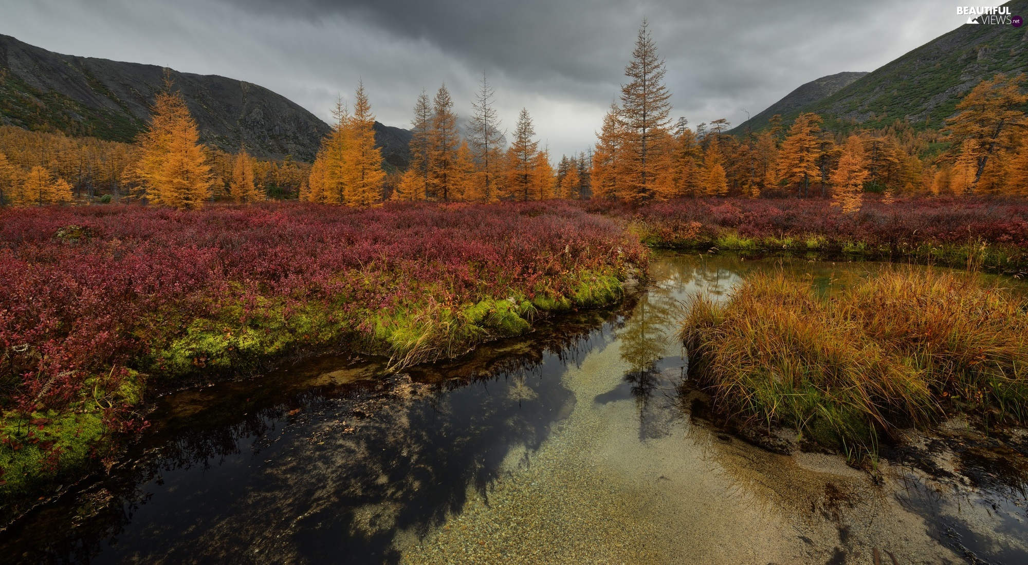 Magadan Circuit, Russia, autumn, Mountains, Kolyma River, VEGETATION, trees, viewes, forest