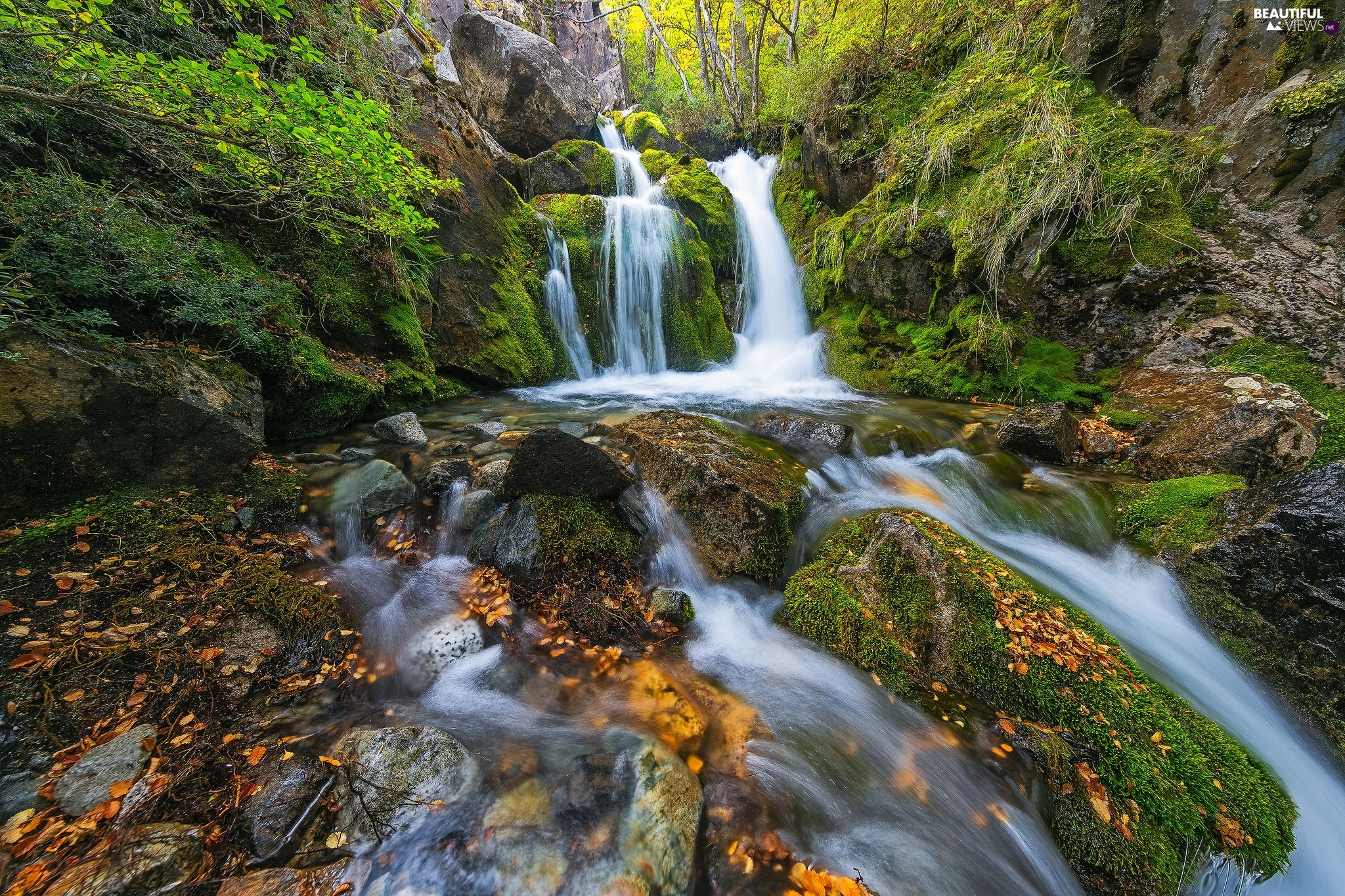 mossy, waterfall, VEGETATION, River, forest, rocks, Leaf