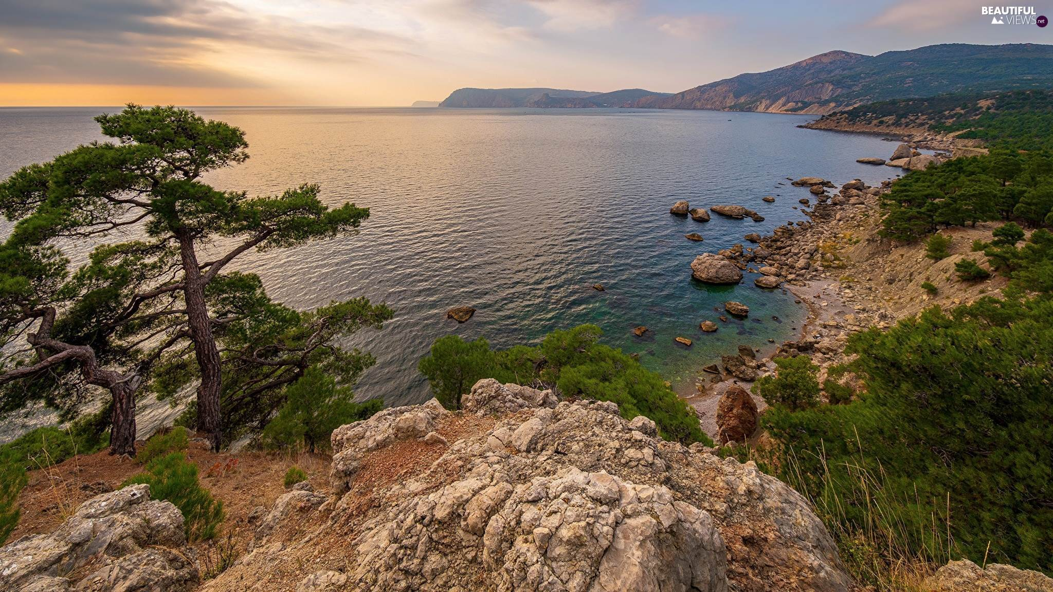 trees, Coast, Crimea, rocks, sea, pine, Russia