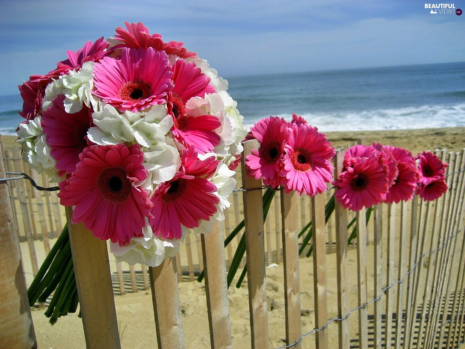 Pink, Beaches, sea, gerberas
