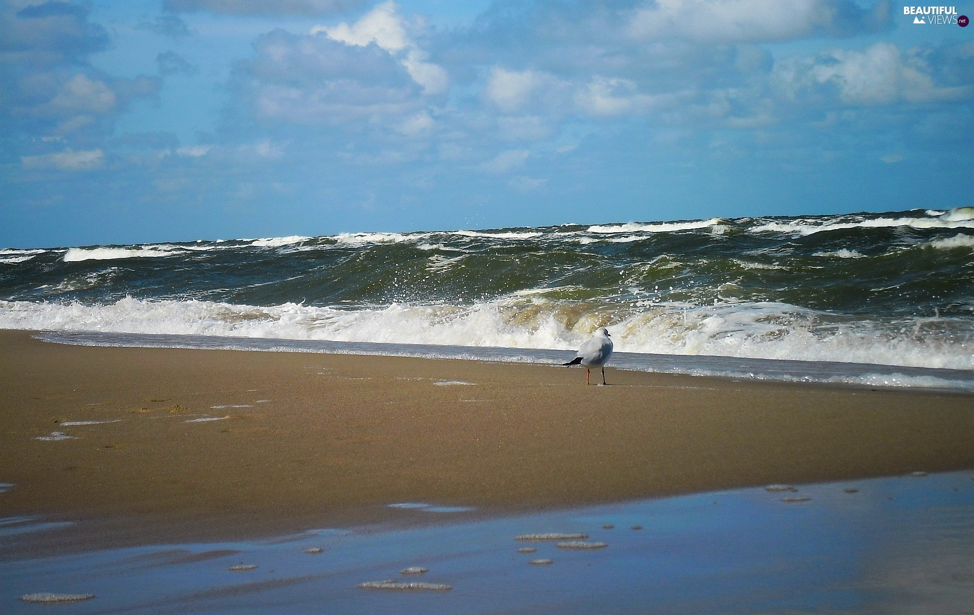 seagull, Waves, sea, Beaches, summer