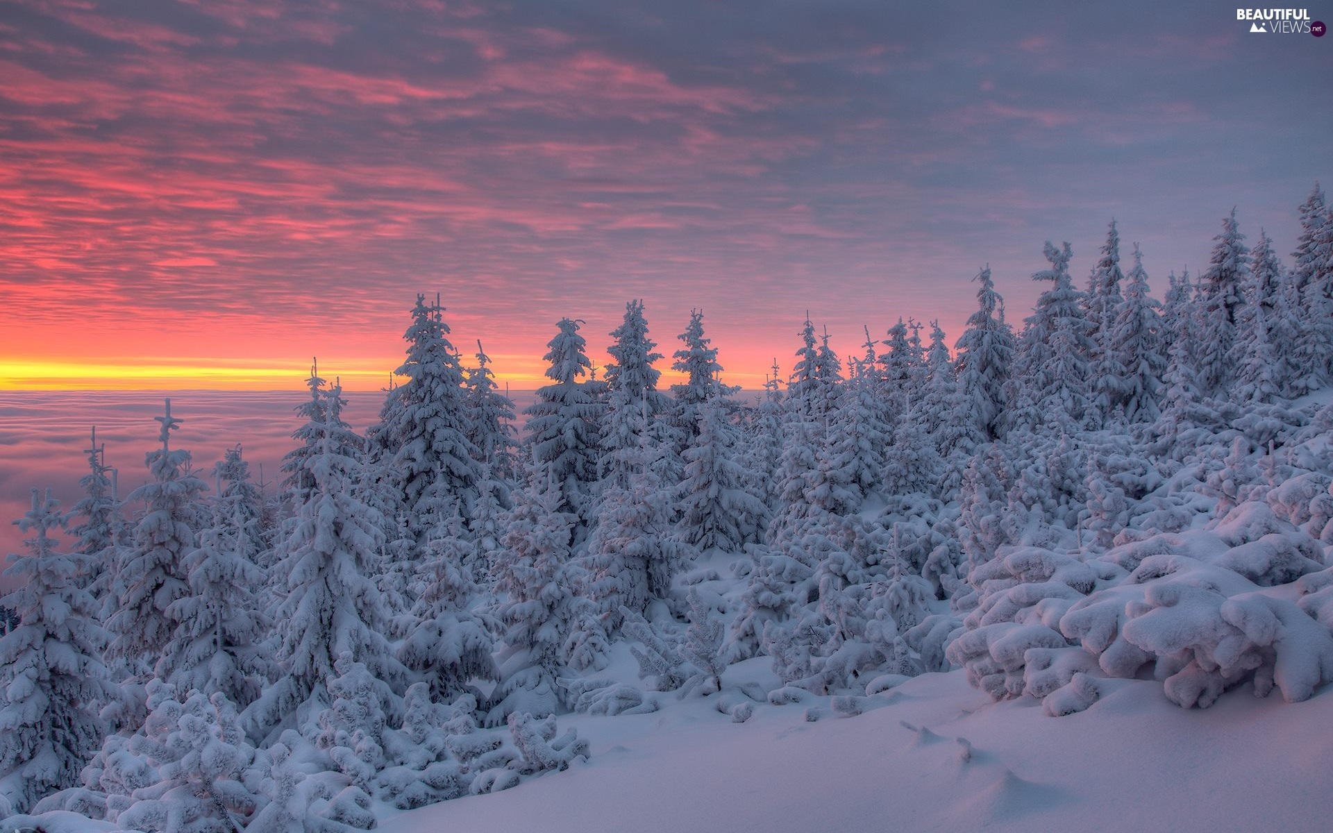Snowy, winter, color, Sky, Spruces, Great Sunsets