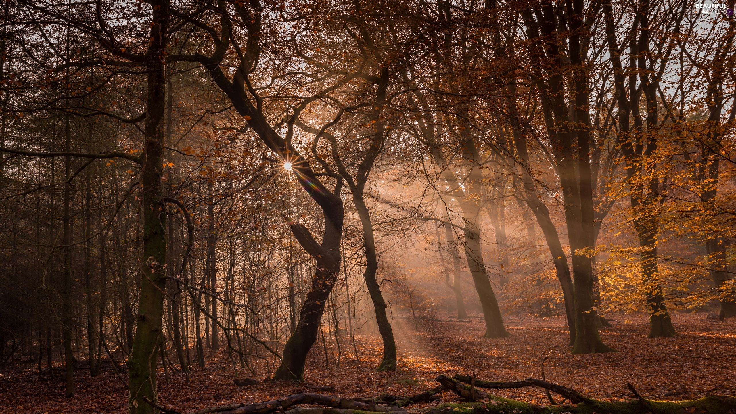 viewes, forest, rays of the Sun, light breaking through sky, autumn, trees