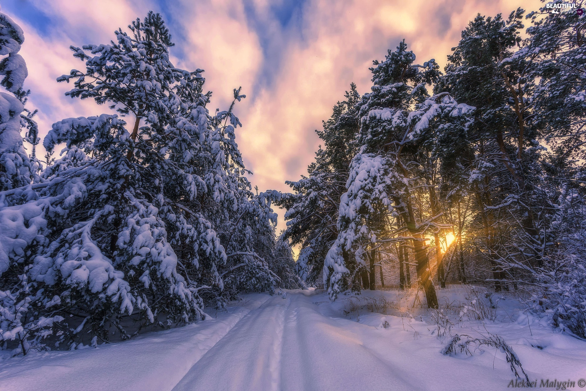 forest, winter, Snowy, trees, Way, clouds, light breaking through sky, snowy, viewes