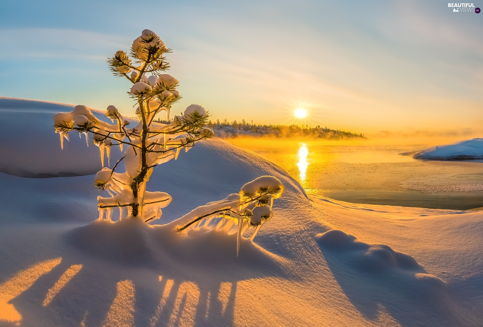 sapling, lake, Fog, snowy, winter, icicle, Sunrise