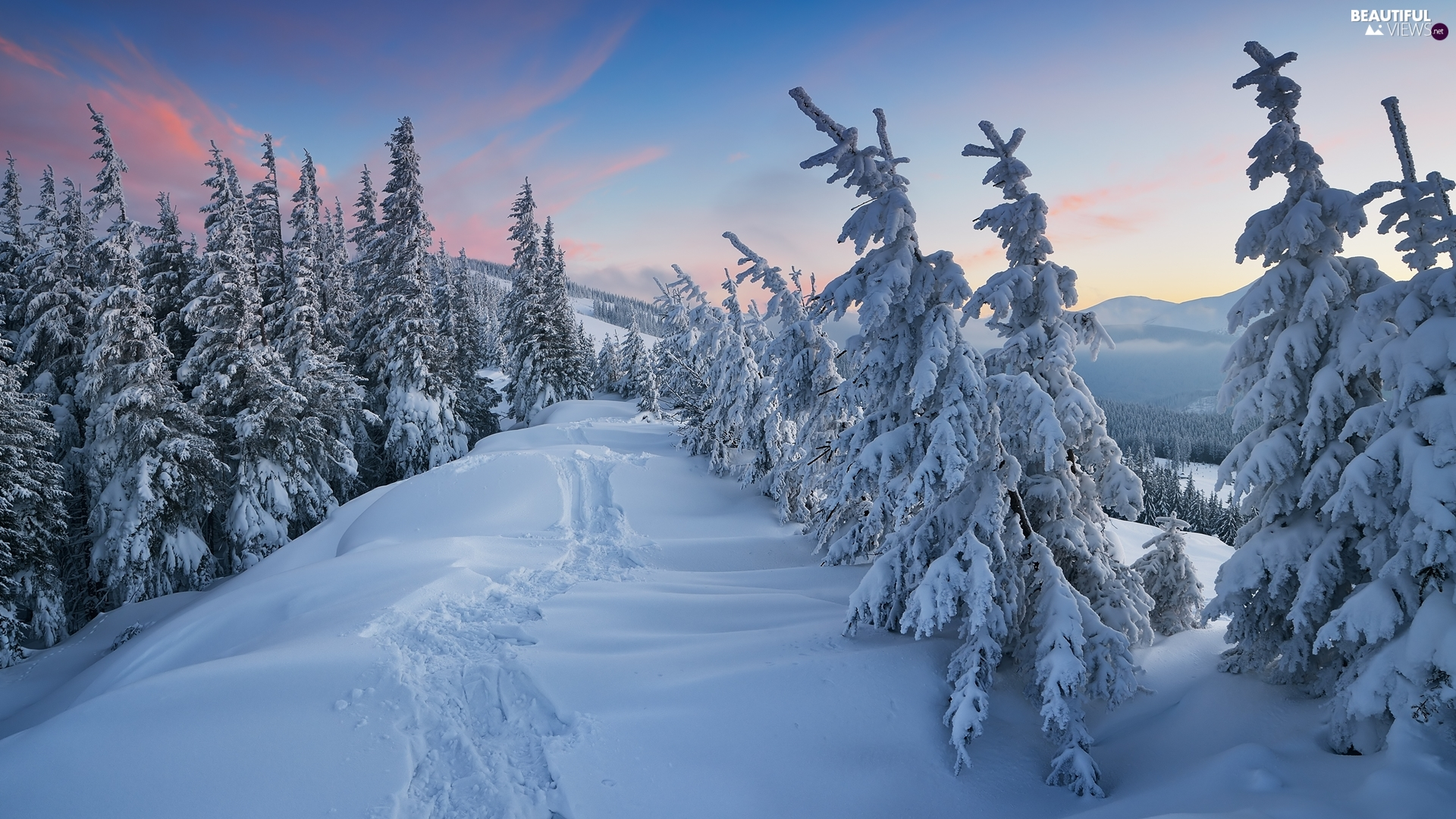 winter, Spruces, Hill, Snowy
