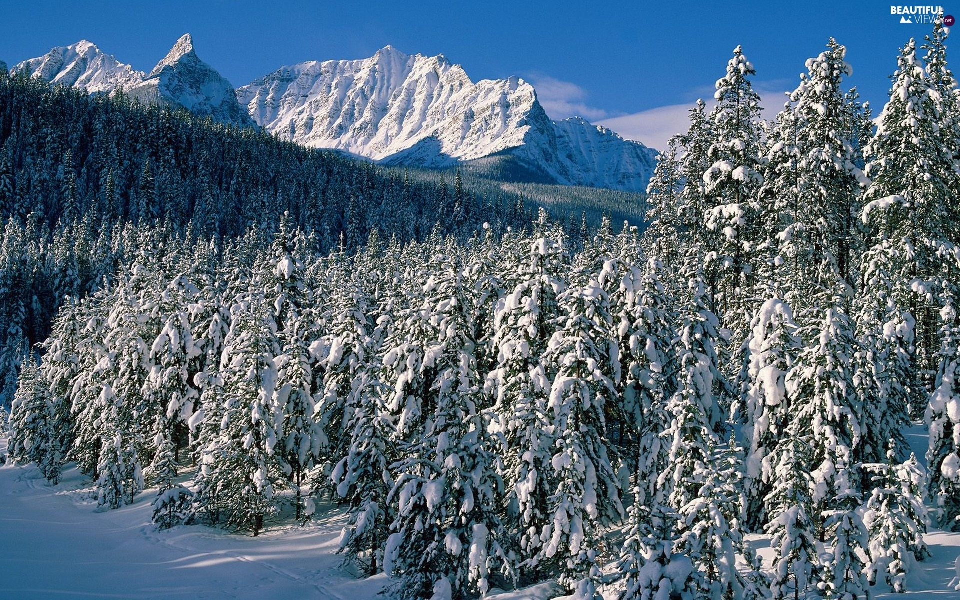 Mountains, Snowy, Spruces, winter