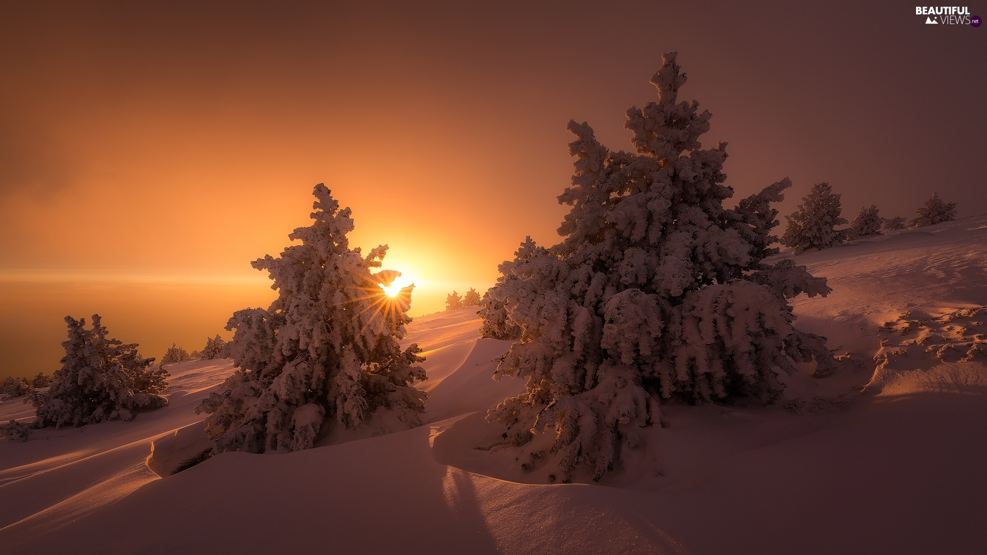winter, Great Sunsets, Spruces, snow