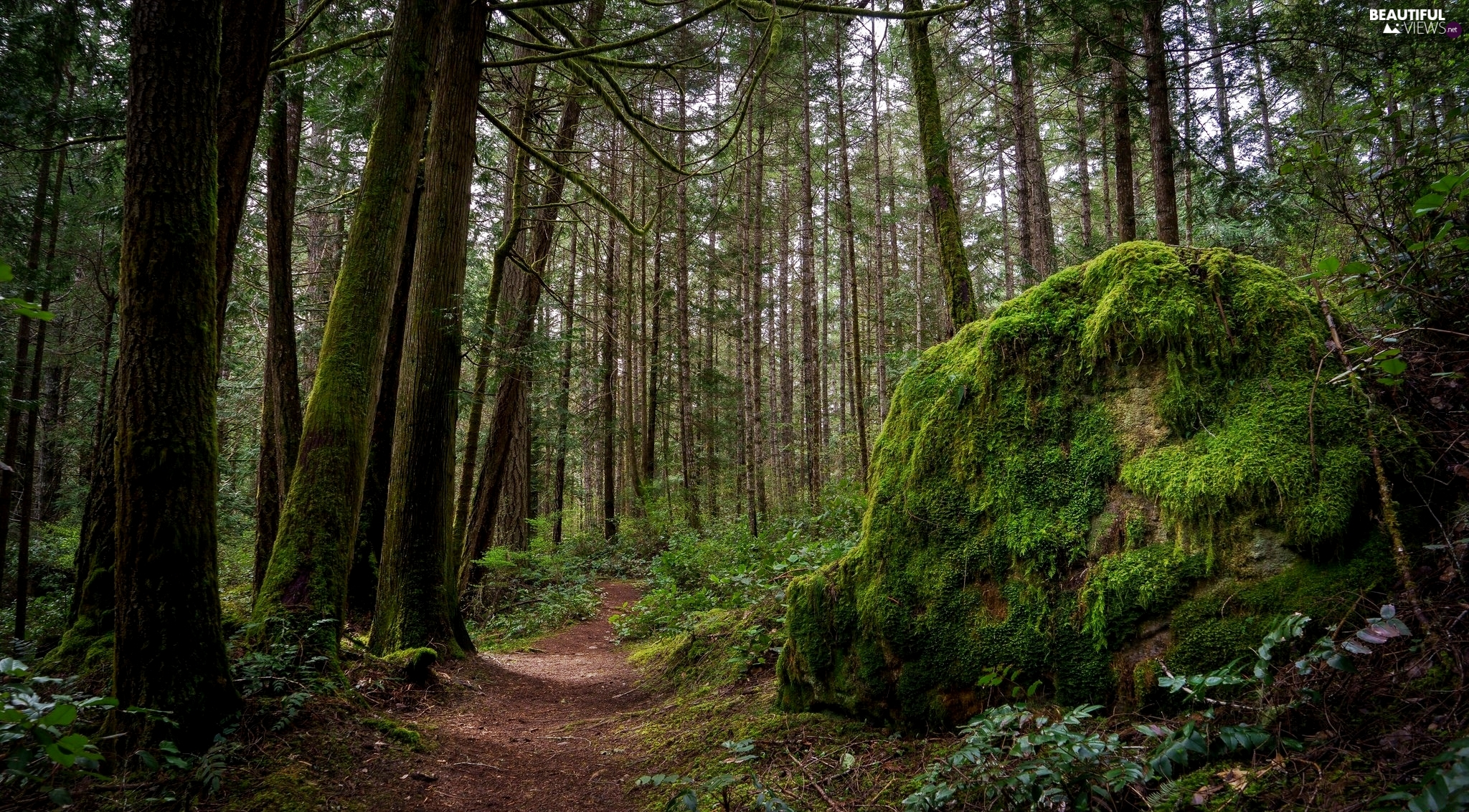 mossy, Stone, Path, Plants, forest