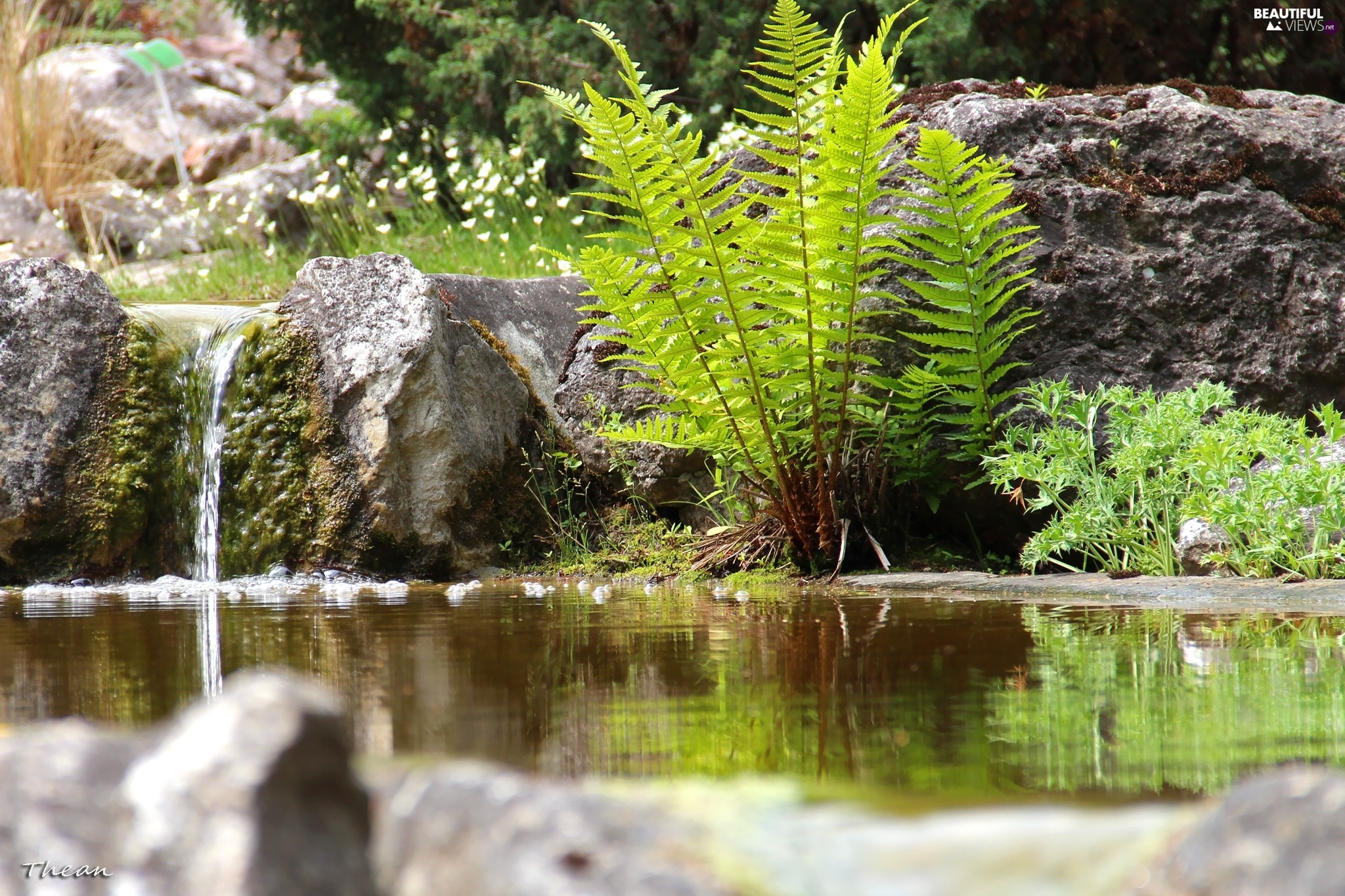 fern, water, Stones, eye