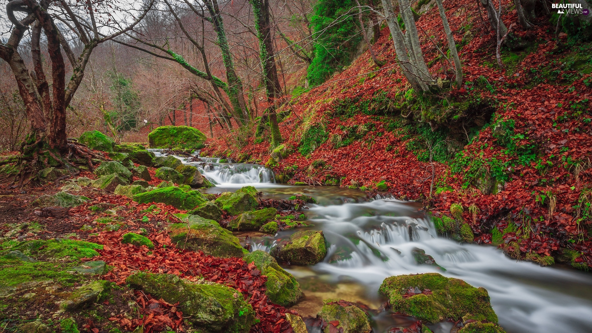 mossy, Stones, forest, River, autumn