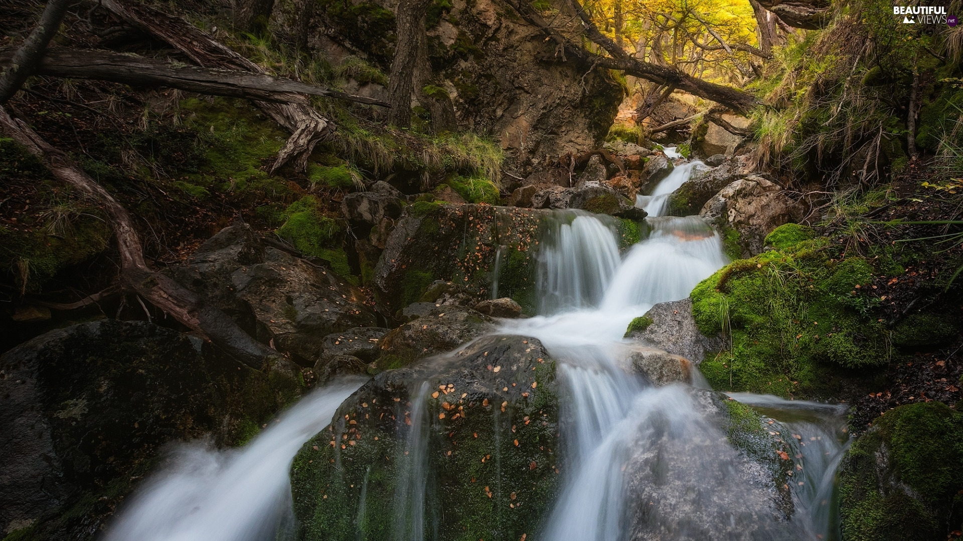 VEGETATION, Patagonia, forest, Stones, River, Argentina, Los Glaciares National Park, rocks, mossy, waterfall