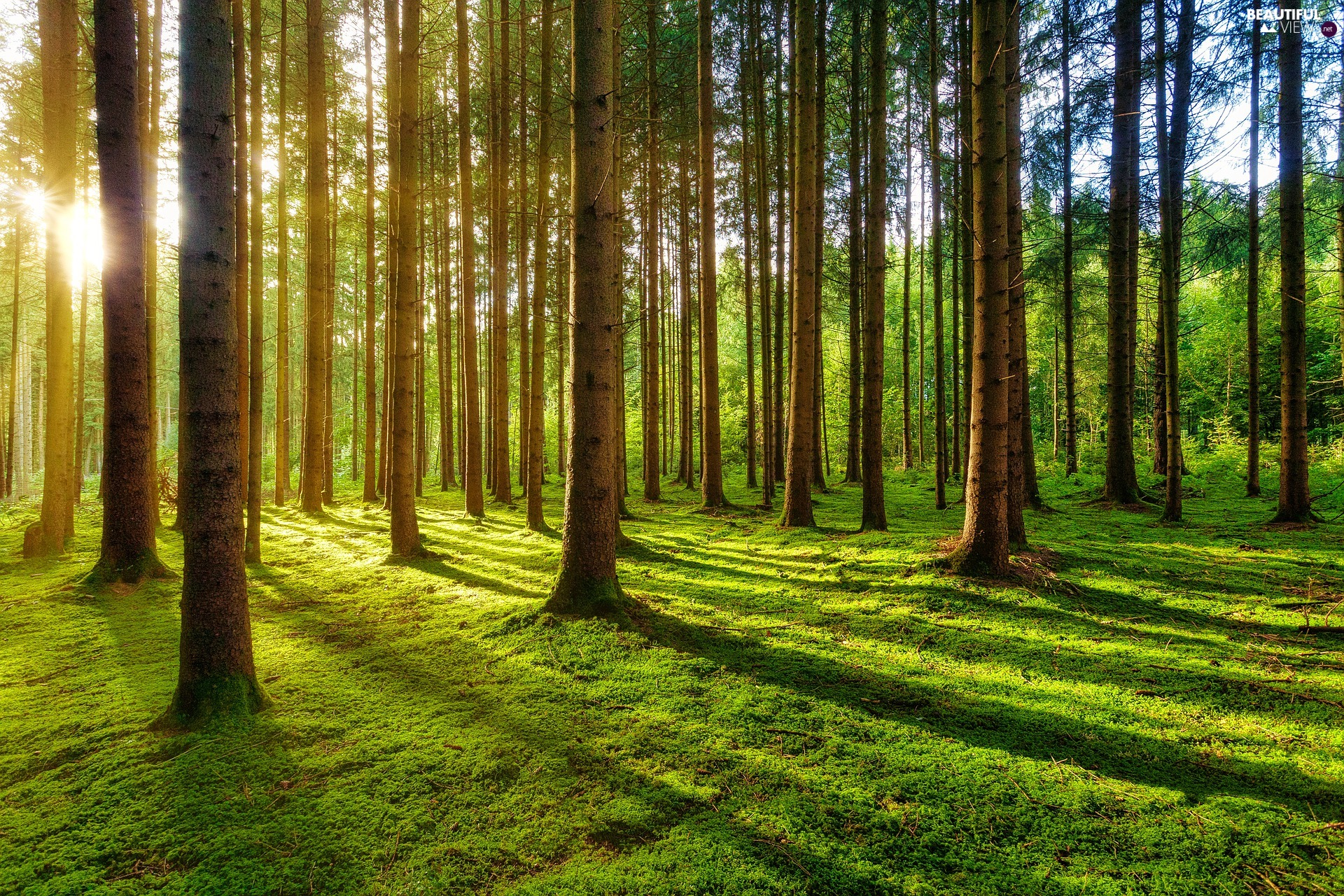 sun, sheathing, trees, luminosity, viewes, forest, forester, sunny, flash, ligh