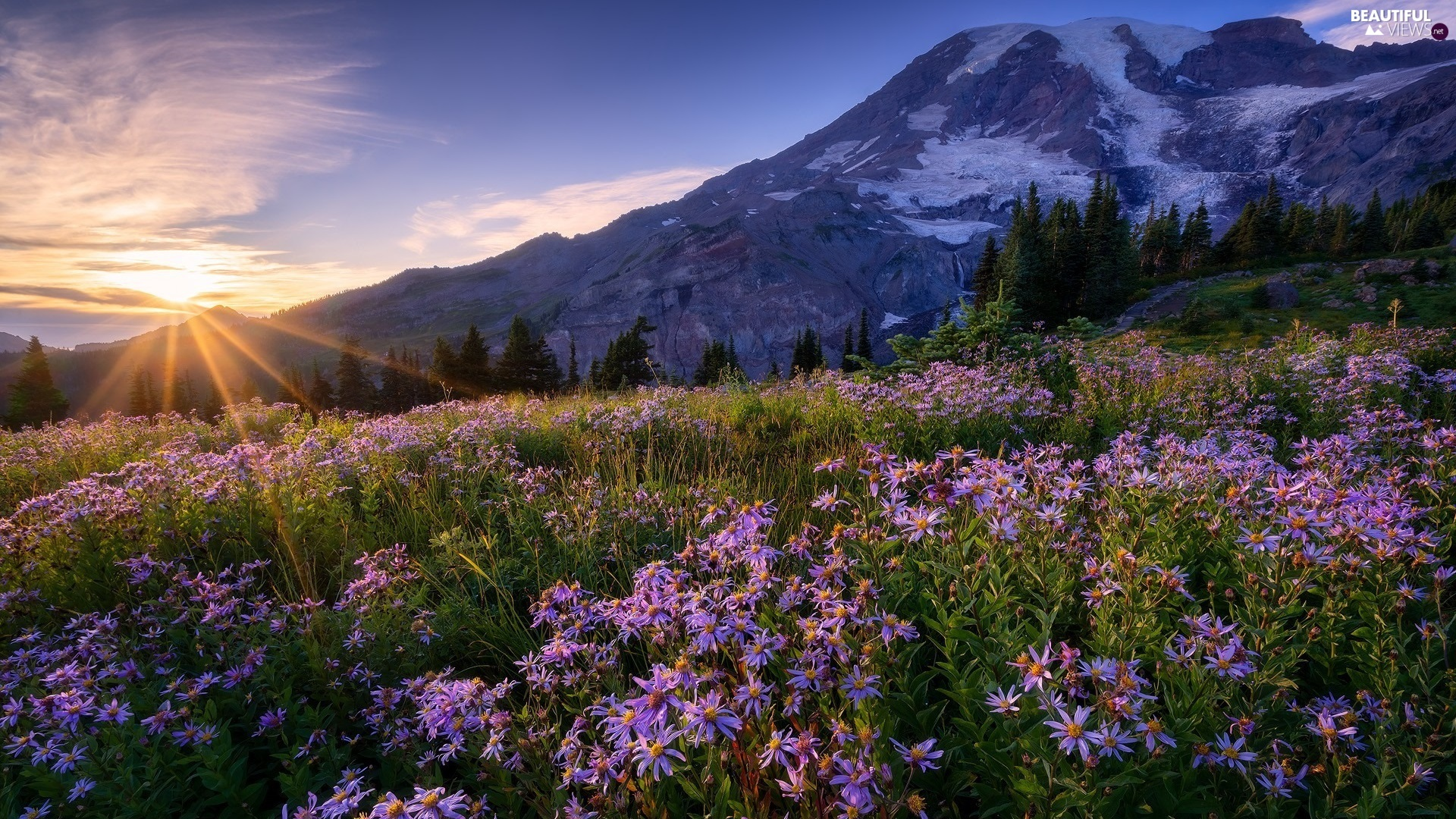 Mount Rainier National Park, The United States, Stratovolcano Mount Rainier, Meadow, viewes, Mountains, rays of the Sun, trees, Flowers