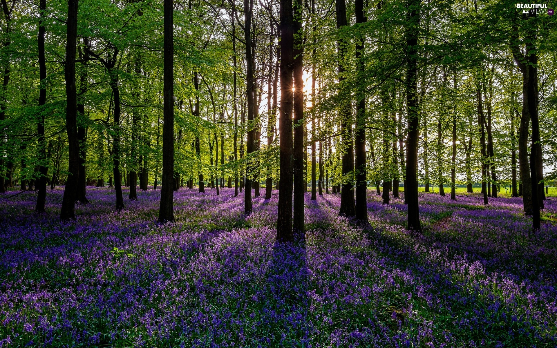 viewes, forest, sun, Spring, Flowers, trees