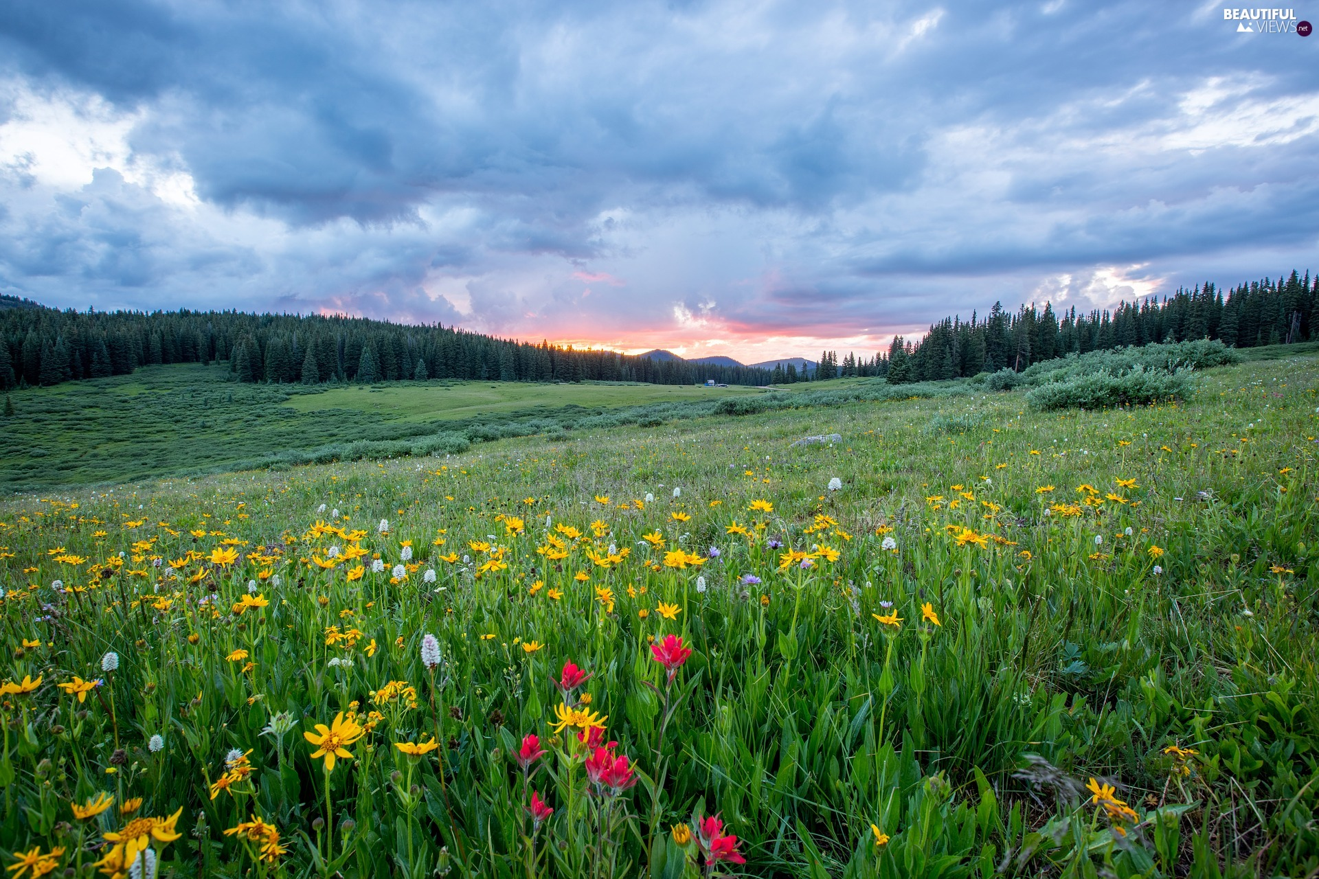 trees, Meadow, clouds, Sunrise, viewes, Flowers