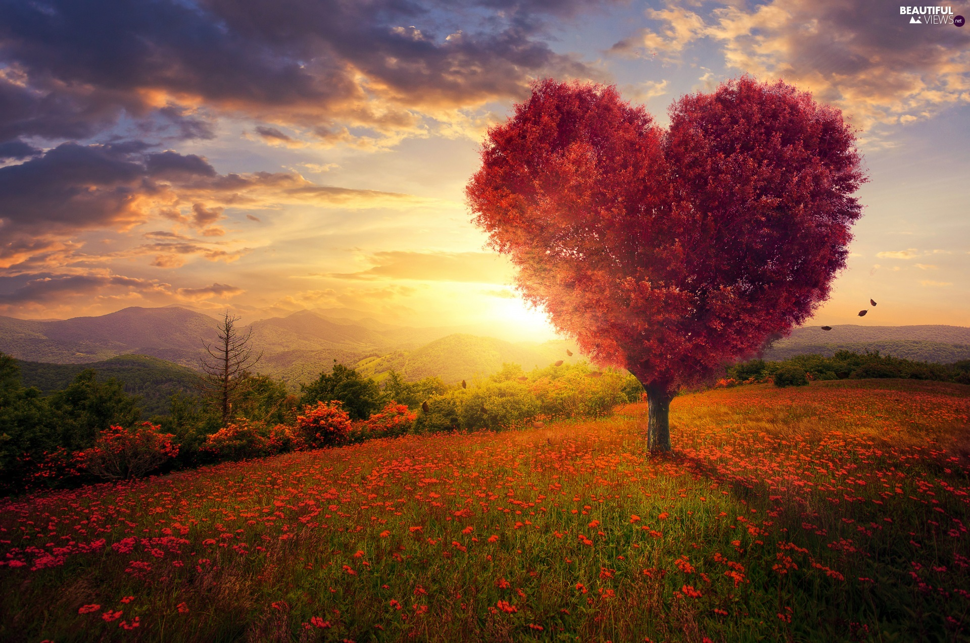 trees, viewes, graphics, Heart, clouds, Mountains, Meadow, Sunrise