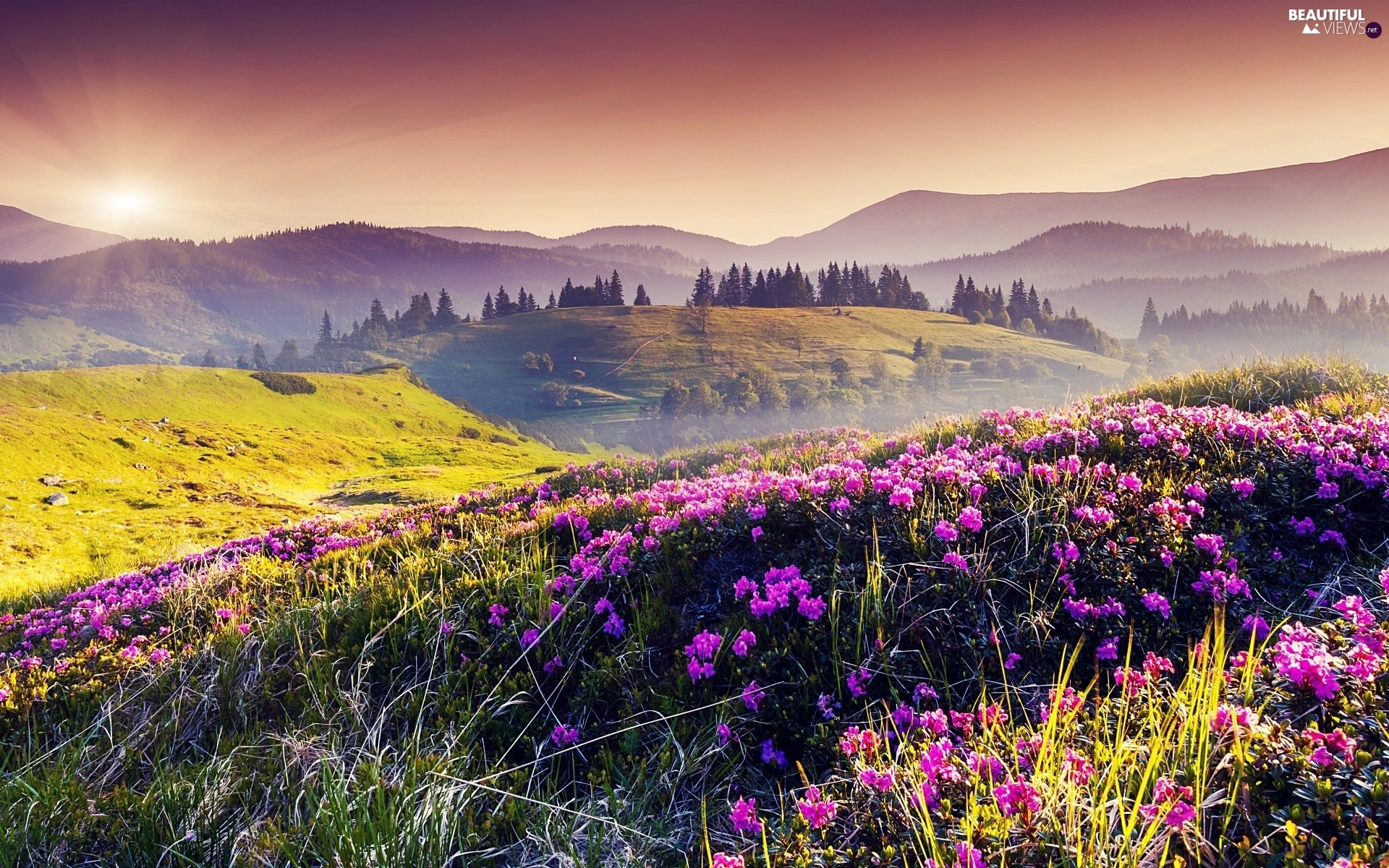 Meadow, Mountains, Sunrise, Flowers
