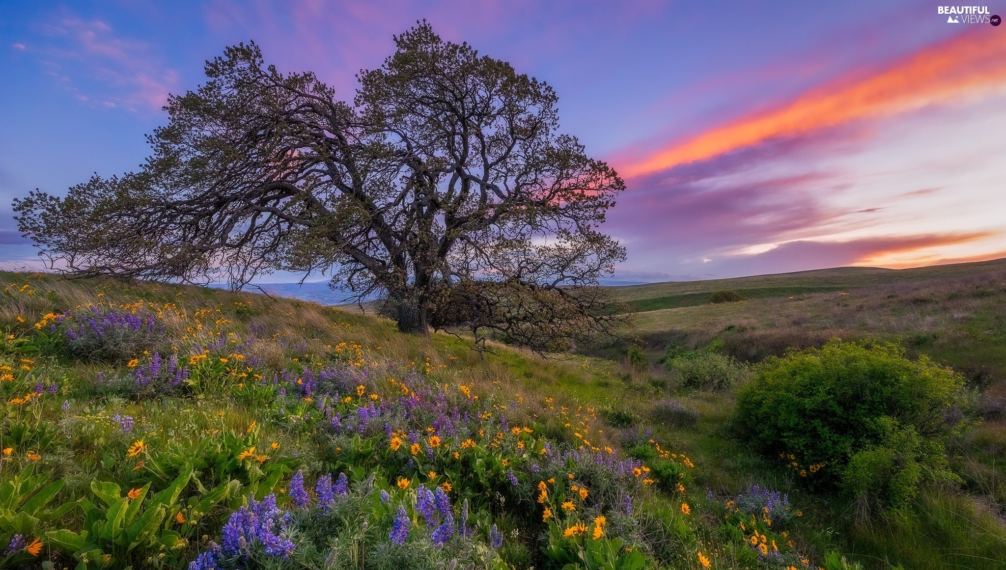 Great Sunsets, Flowers, trees, Meadow