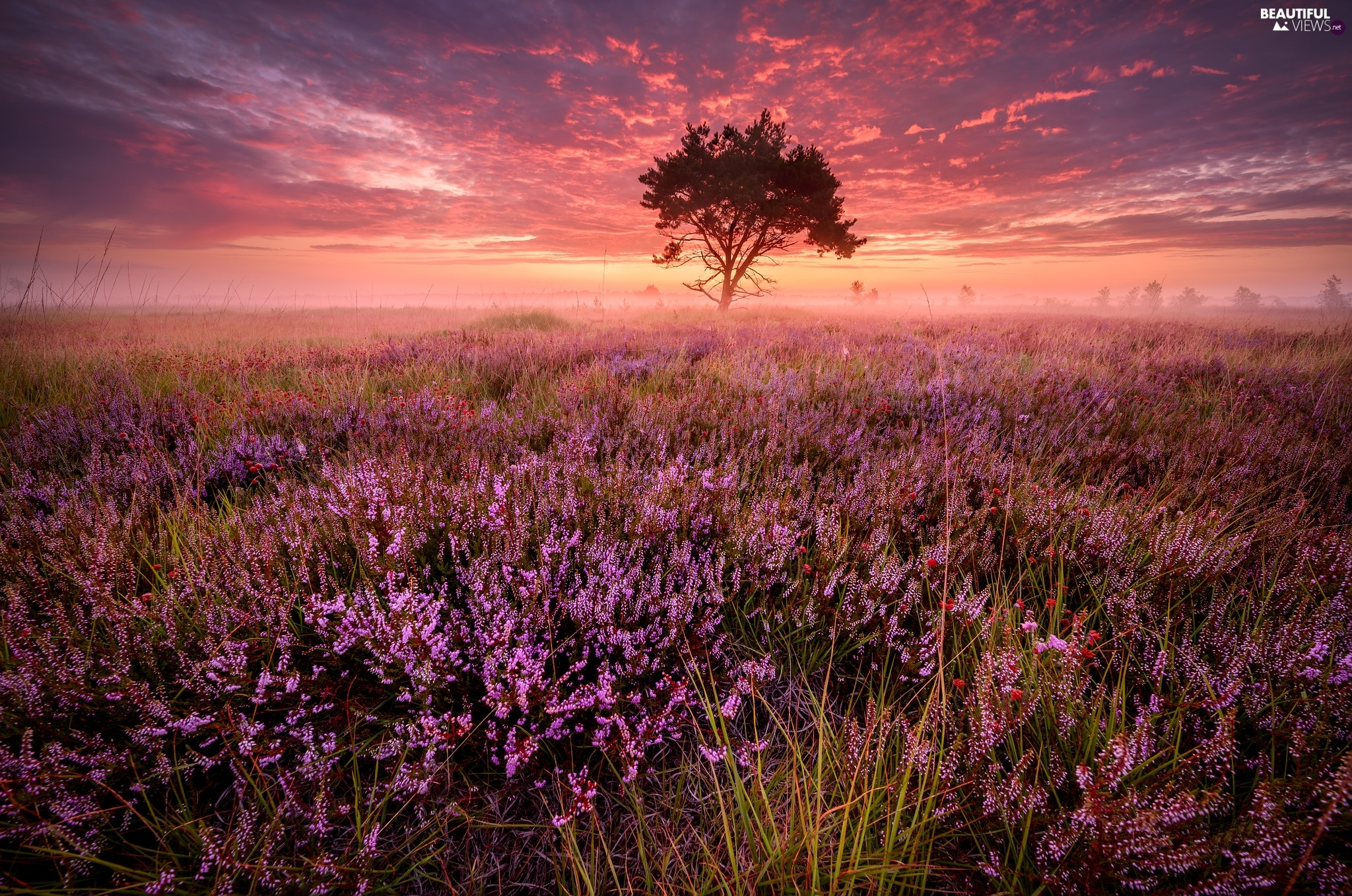 trees, heathers, Great Sunsets, clouds, Fog, heath