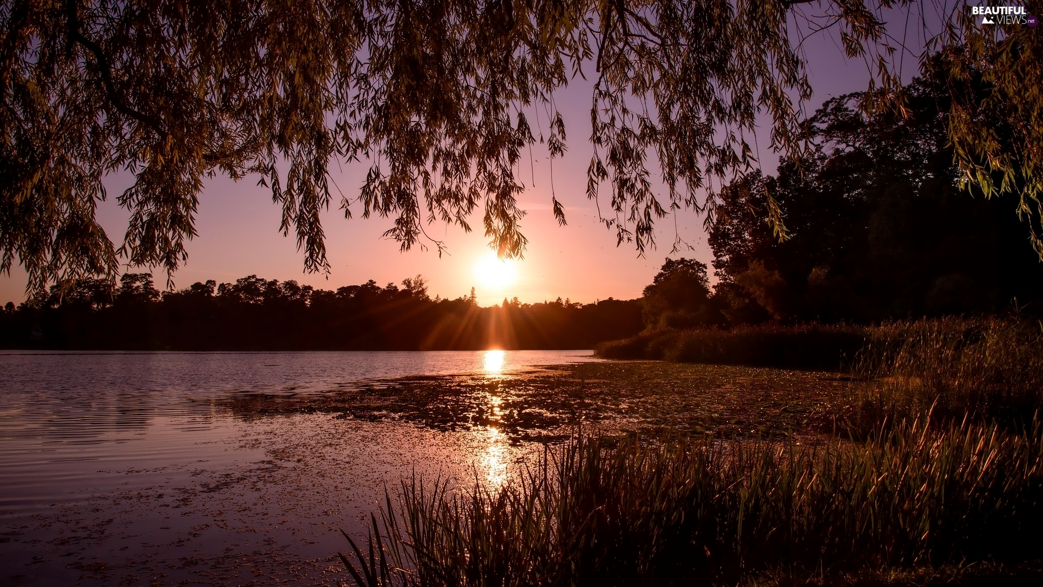 branch pics, lake, viewes, grass, trees, Great Sunsets
