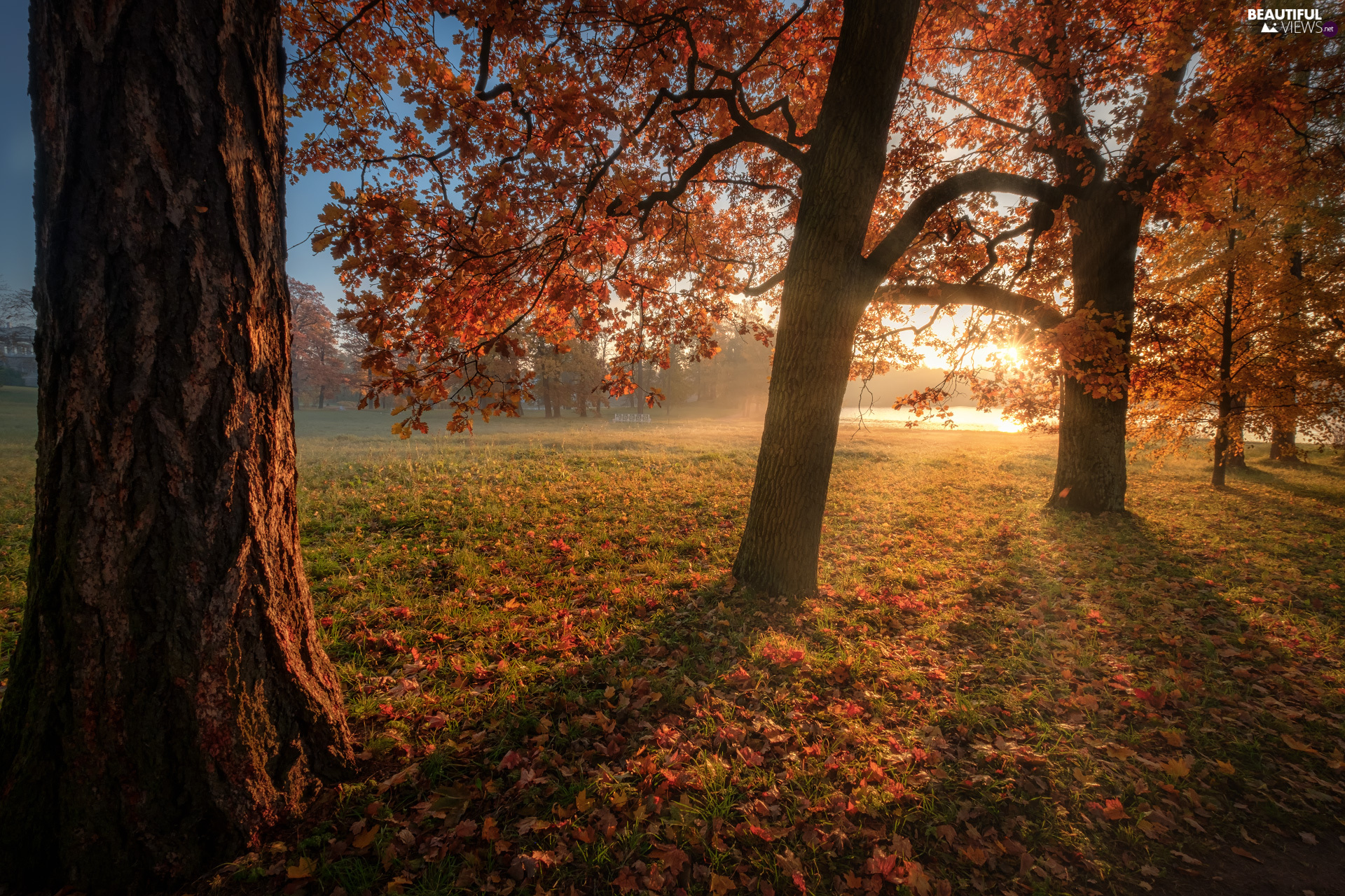 viewes, rays of the Sun, Russia, Park, St. Petersburg, trees, autumn, Tsarskoye Selo
